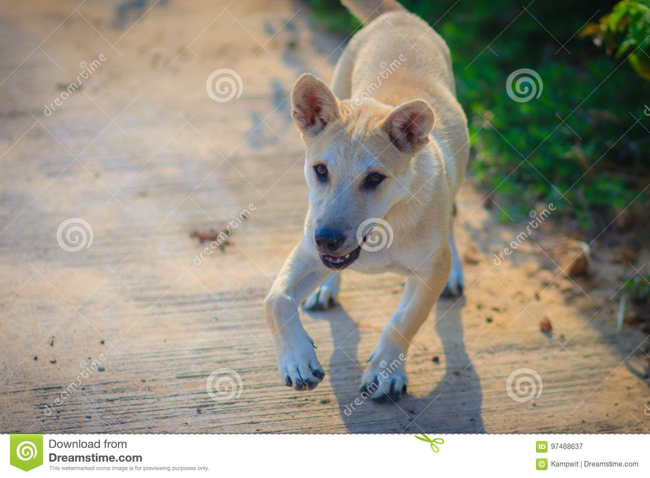 White Disabled Dog That Stand On Concrete Floor In The Morning A