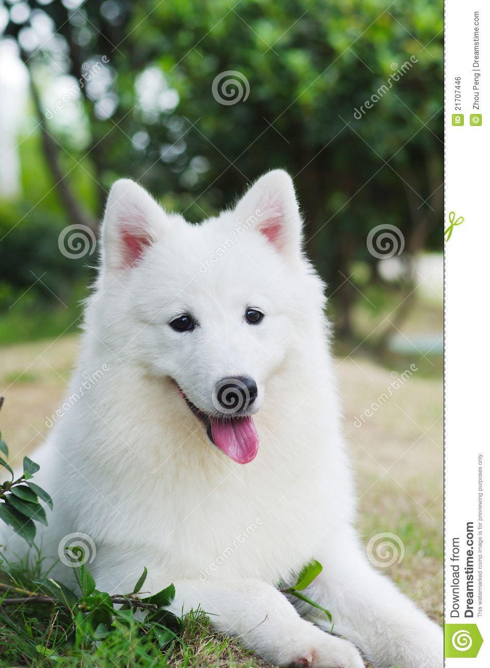 White Dog Royalty Free Stock Image - Image: 21707446 Smiling Dog And Cat