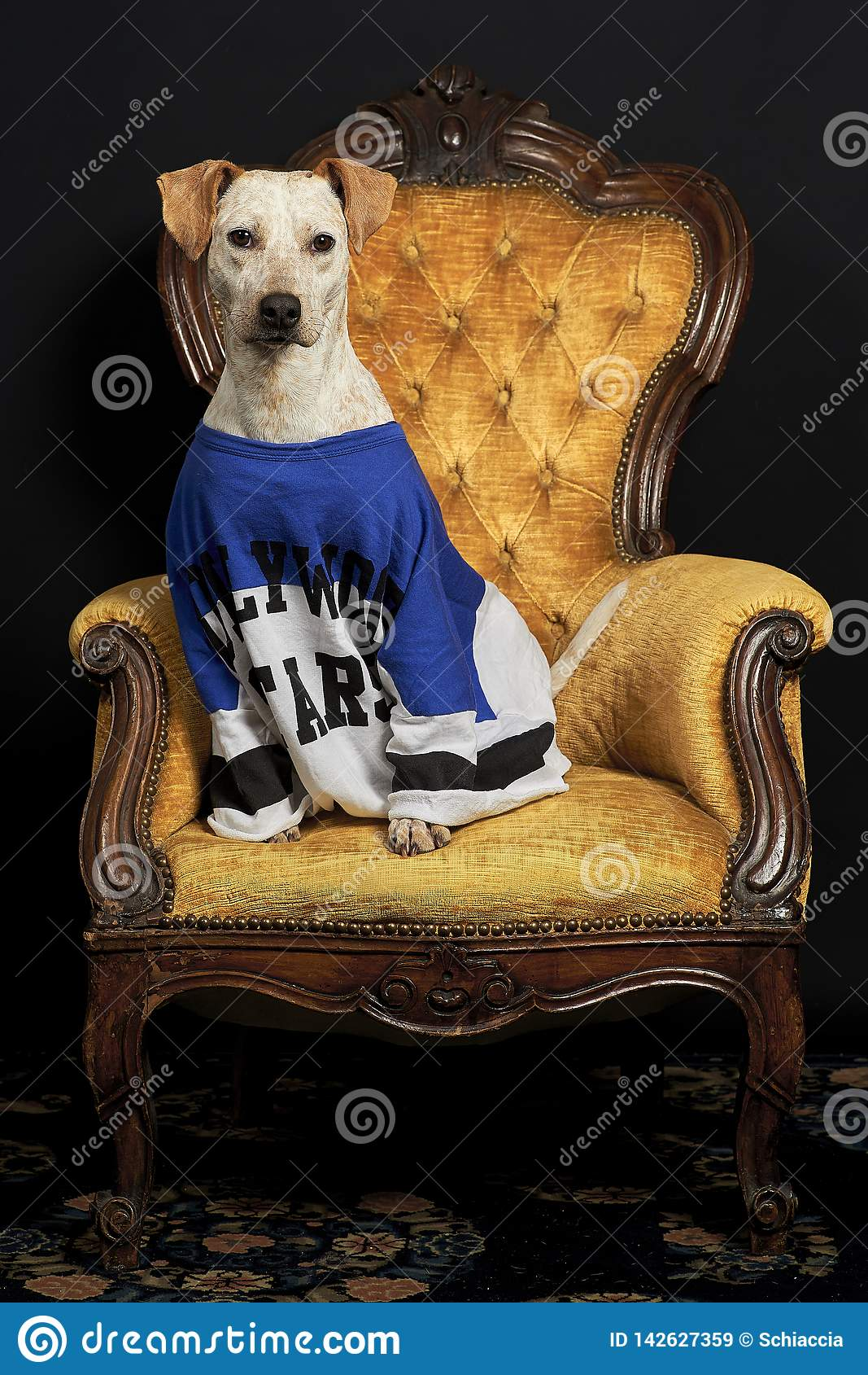 A white dog on armchair stock image. Image of comfortable ...
