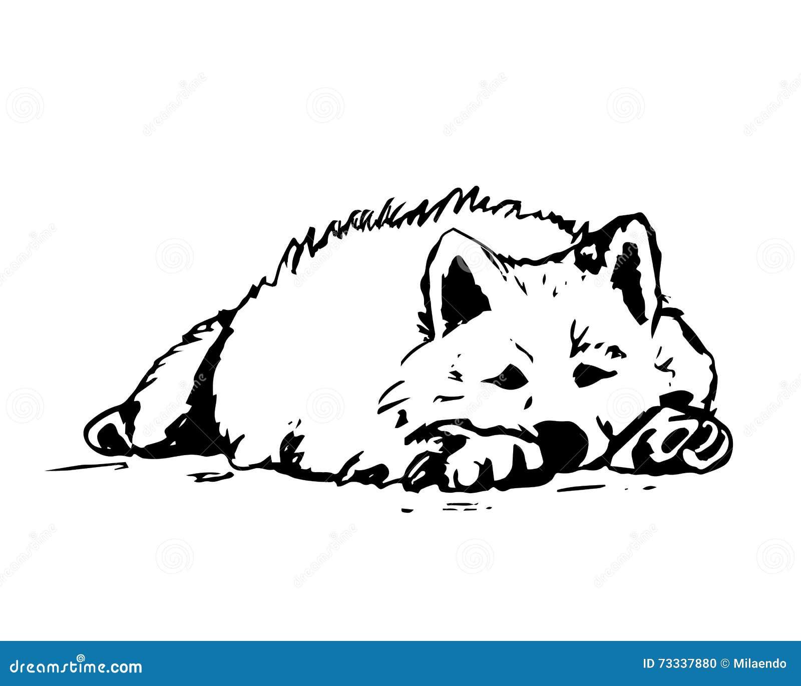 white dog lies stock vector