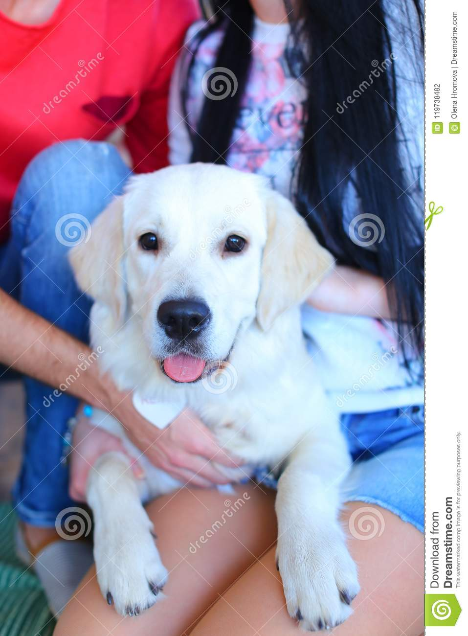 White dog sitting on happy woman and man knees.