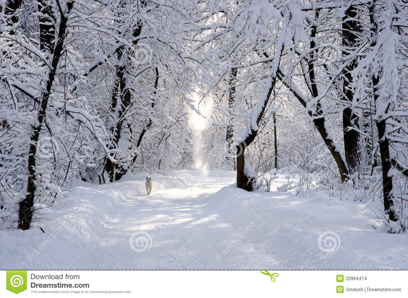Snowy Park Path wallpaper - Photography wallpapers - #16247