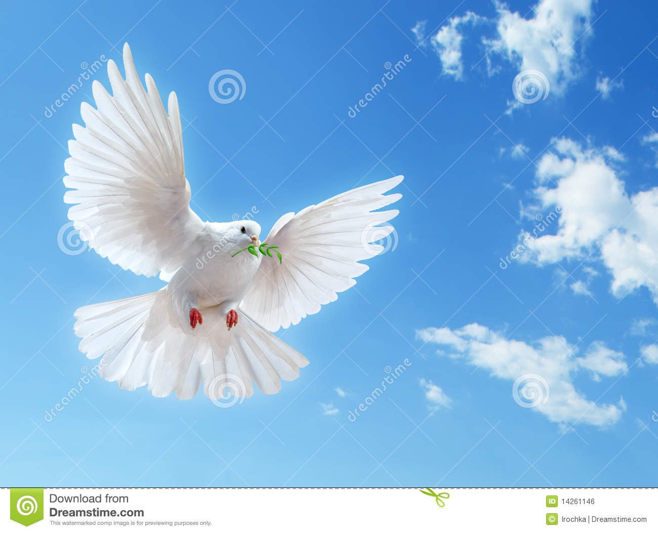 White Dove In Blue Sky Stock Photo. Image Of Feathers