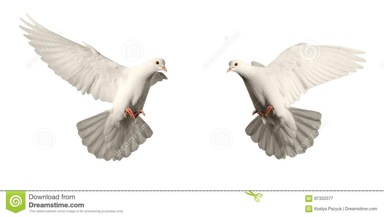 What Does Doves Symbolize The Best Dove 2017