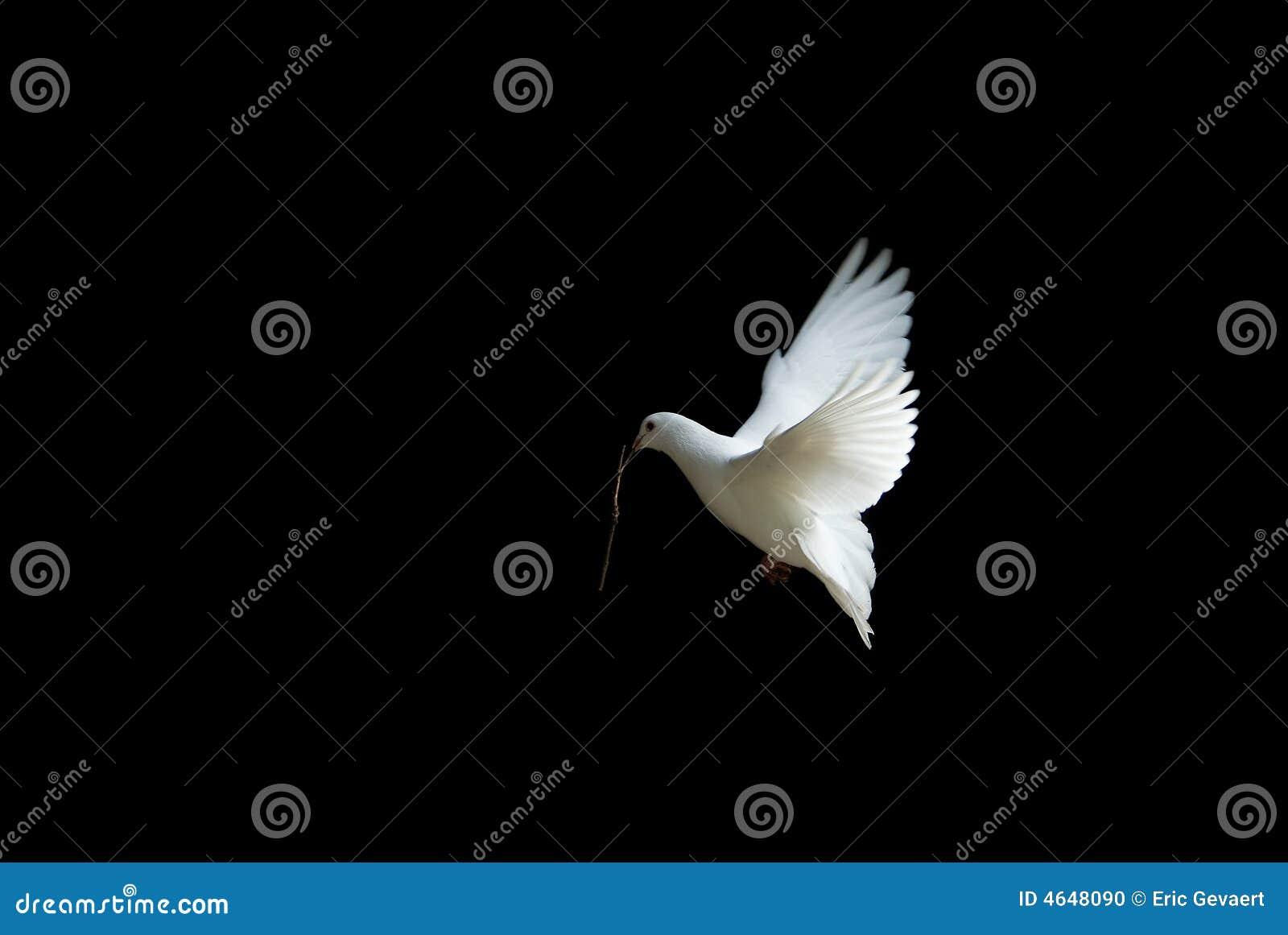 Best stock photos of illustration Dove in flight illustration