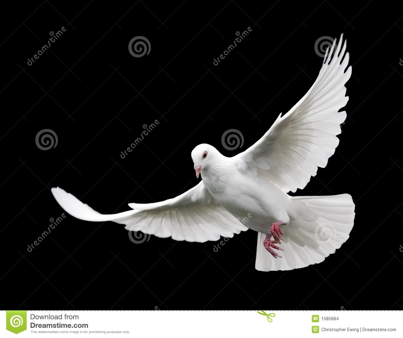white pigeon catholic girl personals Meet hosts who are site supporters can post information here about their meet you can't post here, but you can post notes for your team on the my team tab.