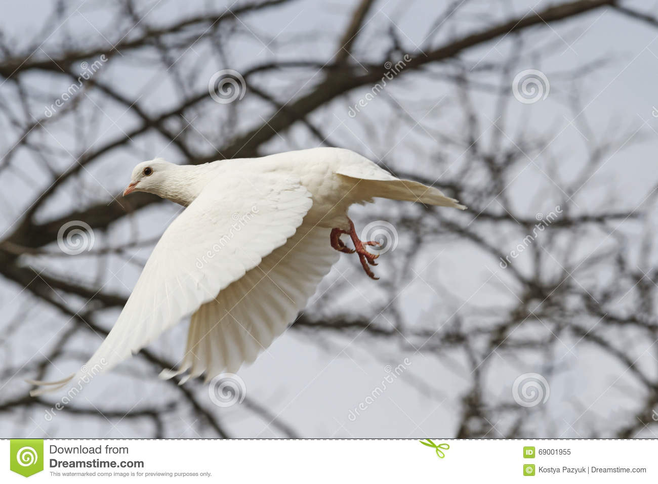 White Dove Flying Through The Thicket Stock Image Image Of Heart