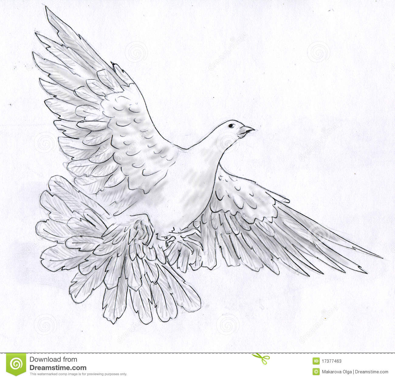 White dove symbol of peace spread its wings flying pencil drawing sketch