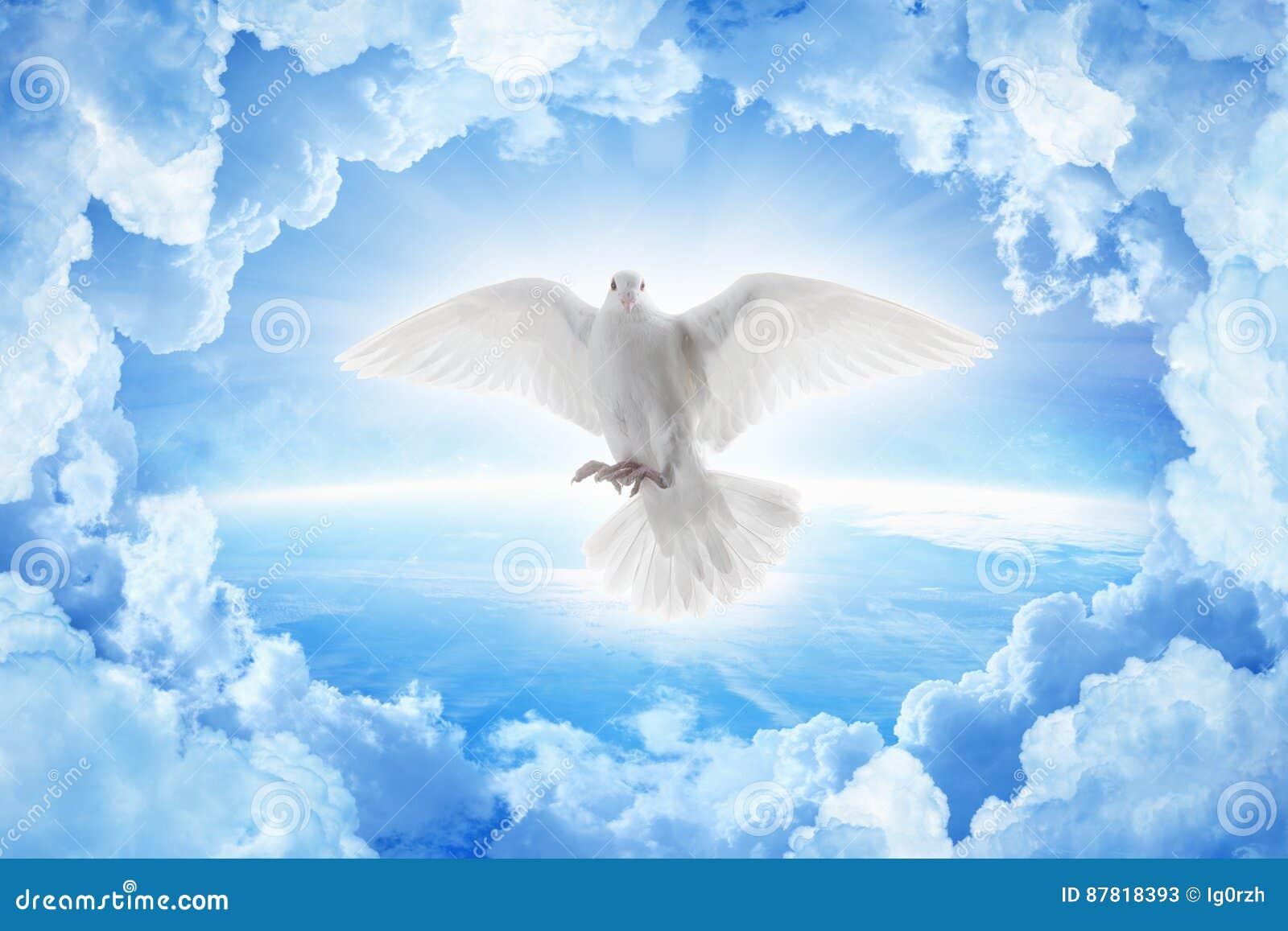 Thumbsdreamstimezwhite Dove Symbol Love Pea