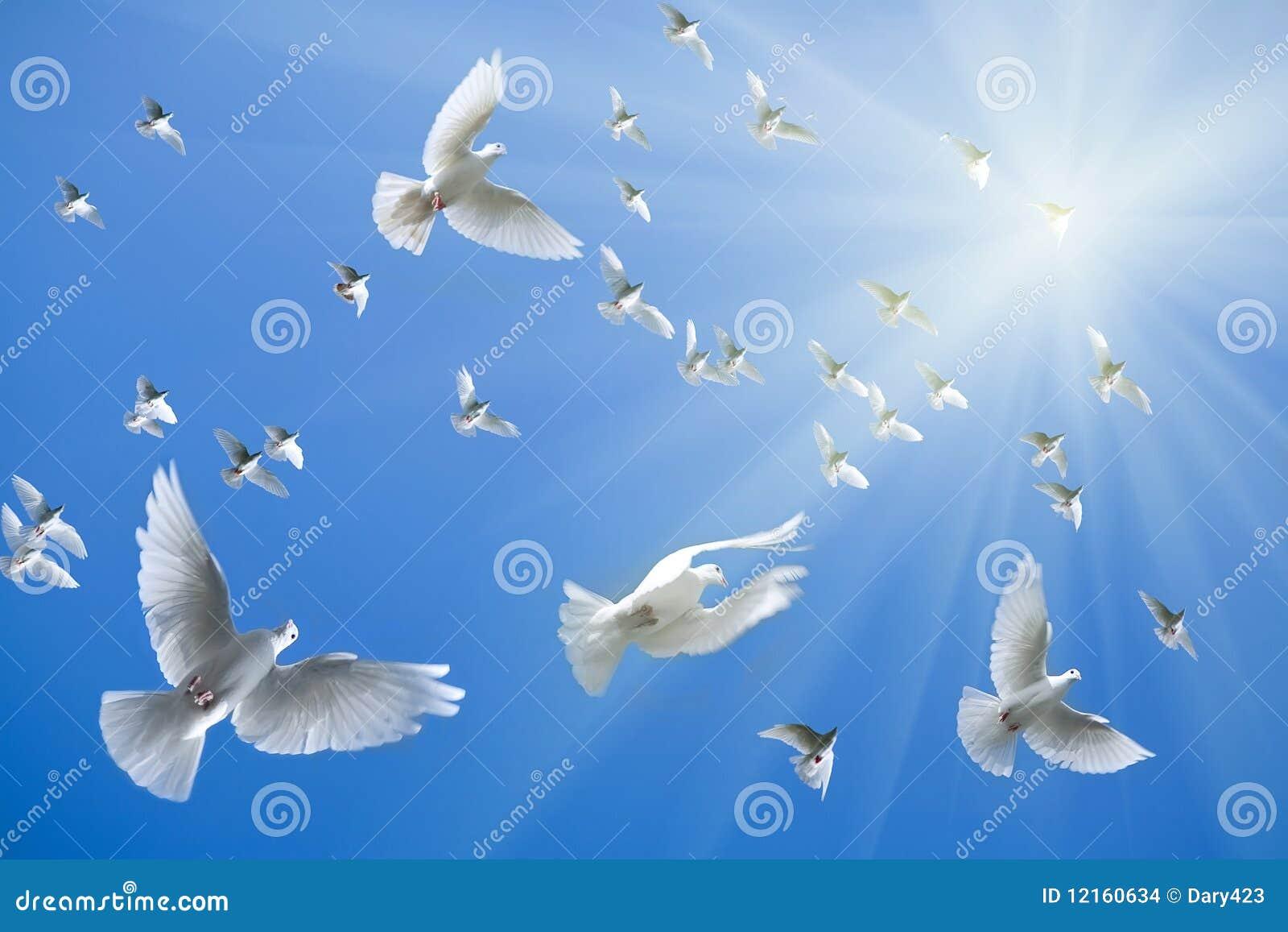 White Doves Flying Stock Images - Image: 12160634