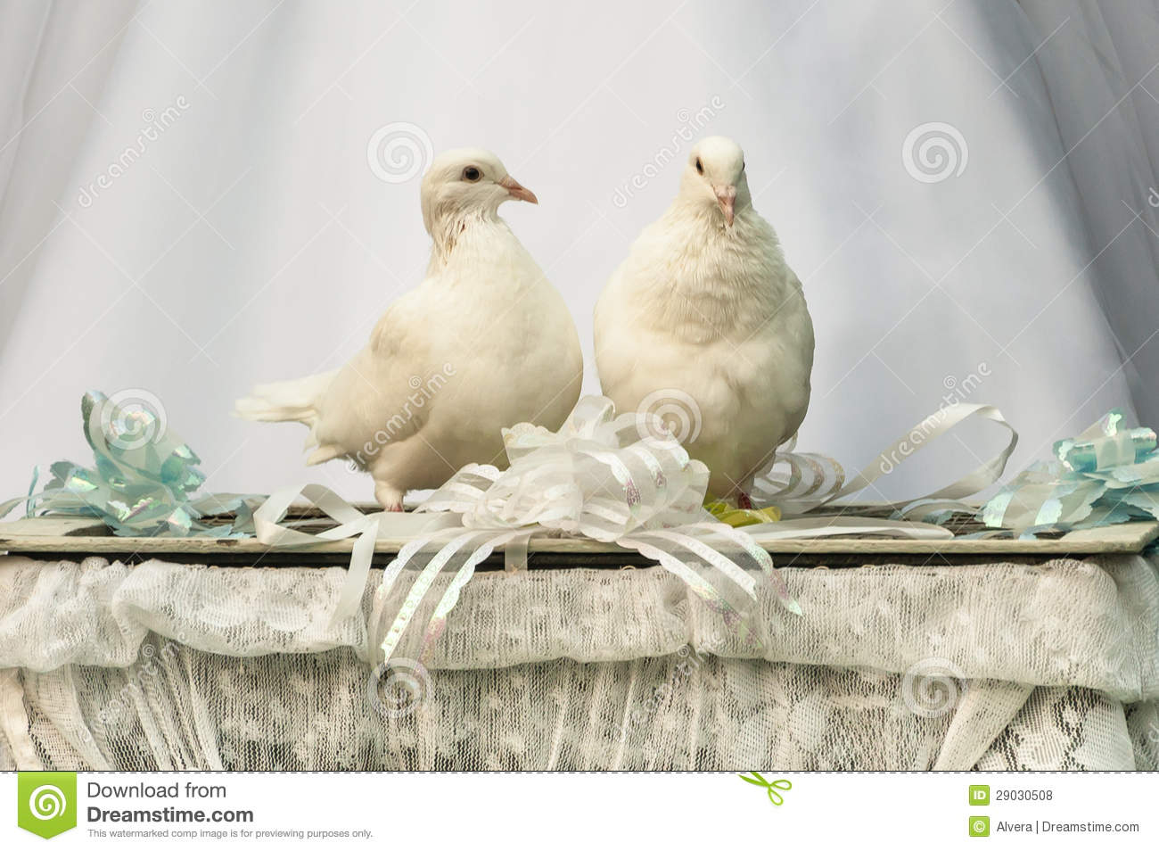 White Doves Wedding Bird Stock Photo Image Of Sooth