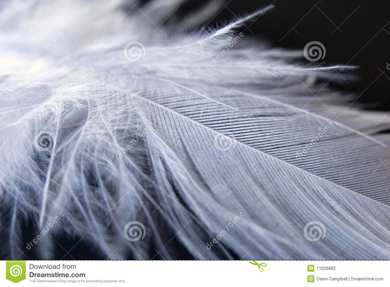 white down feather on black background stock photography image 11026882. Black Bedroom Furniture Sets. Home Design Ideas