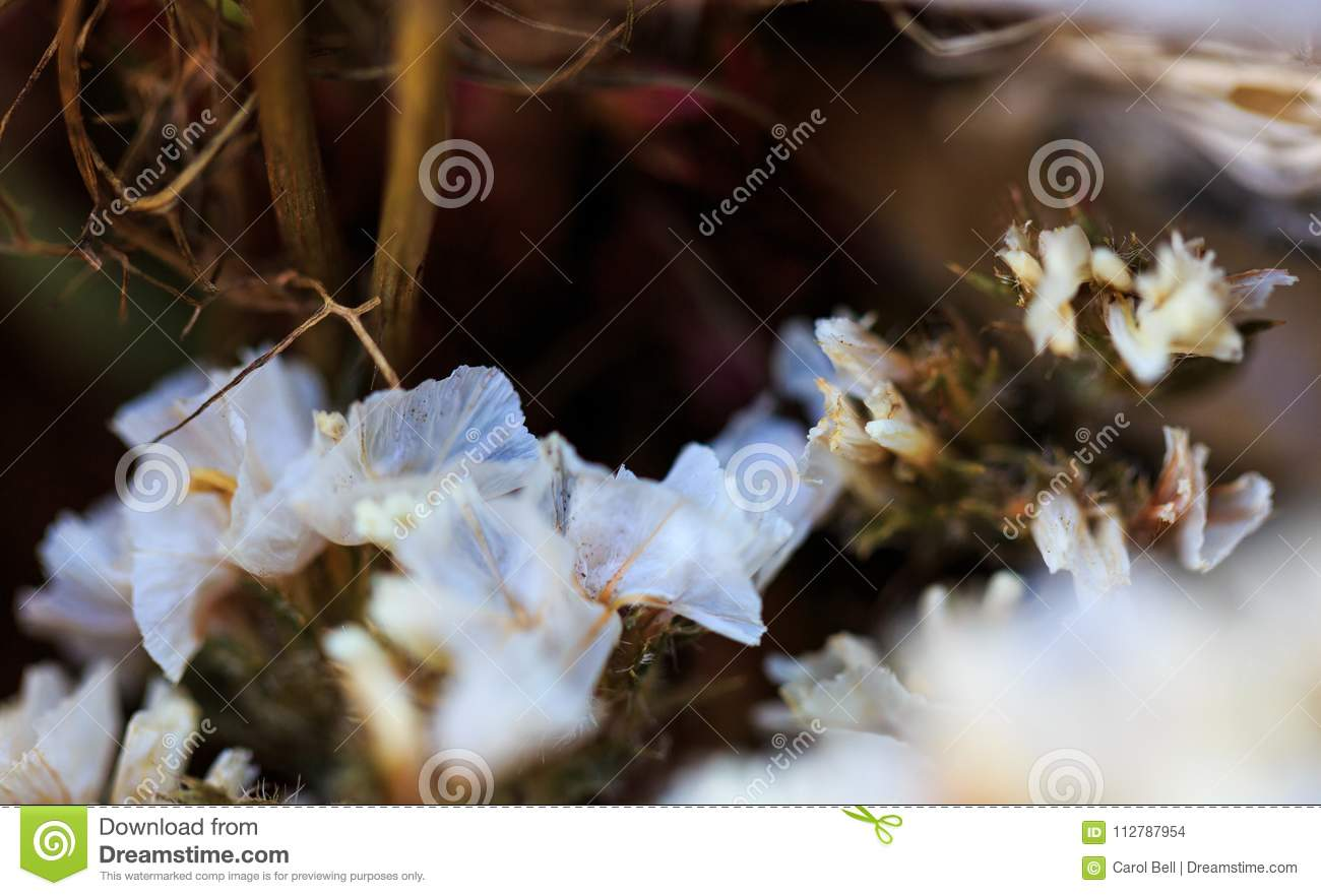 White Dried Flowers At Market In Natural Light Stock Photo Image