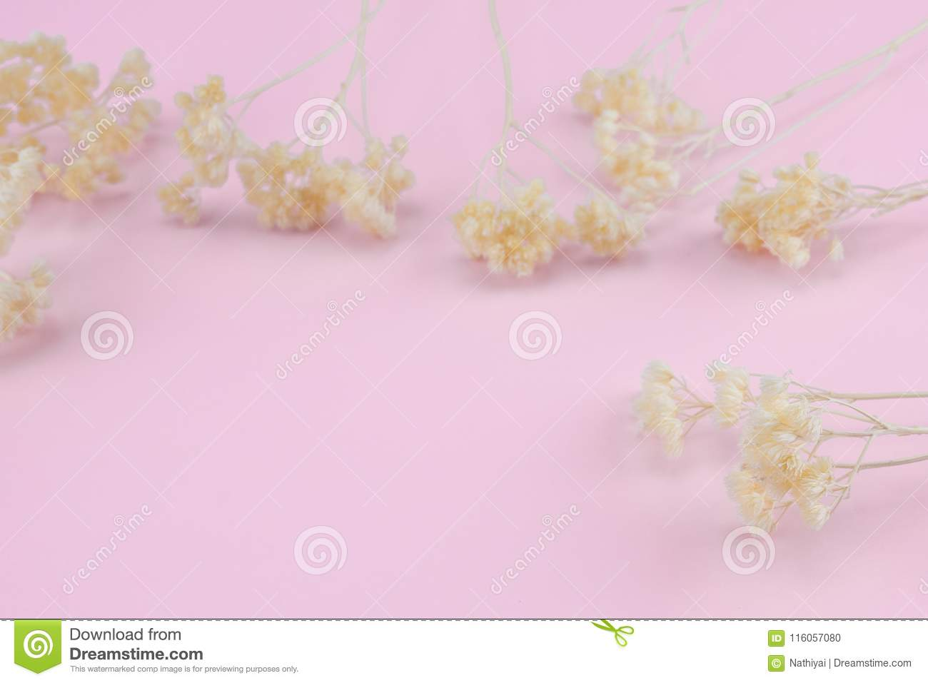 White Dried Flowers On Pastel Pink Background Stock Photo Image Of