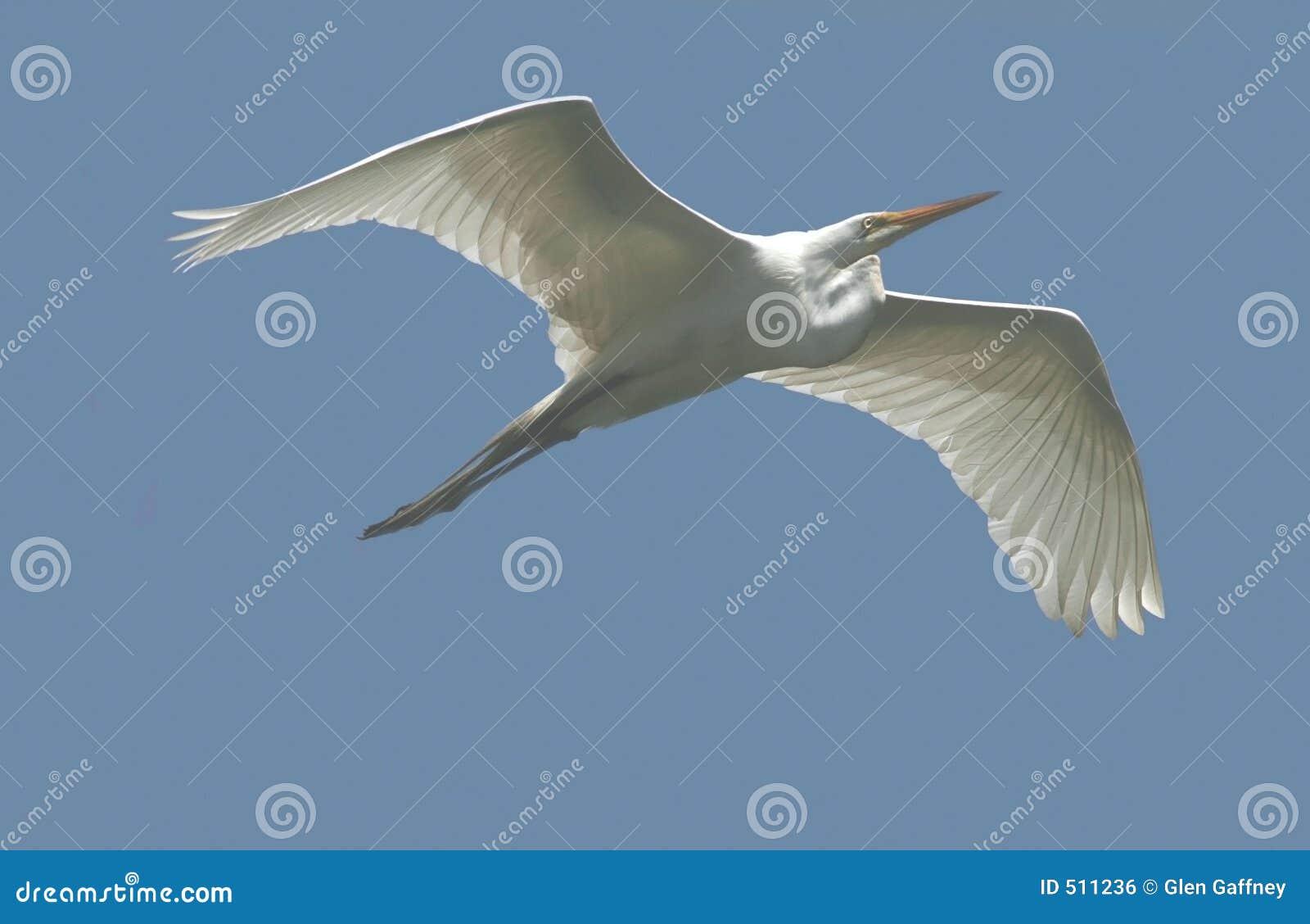 White för egretflyg utmärkt