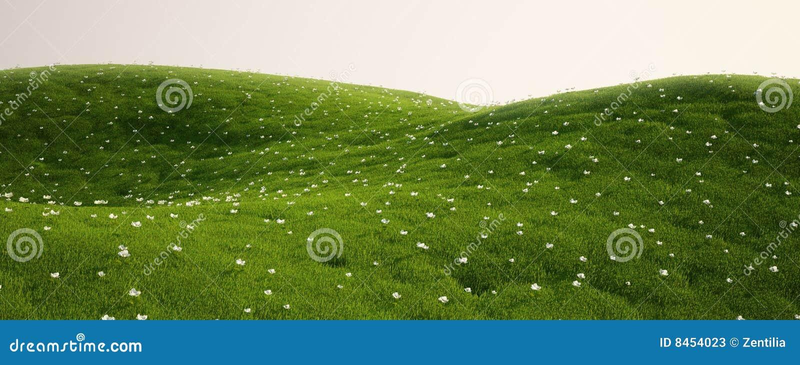 White för fältblommagräs