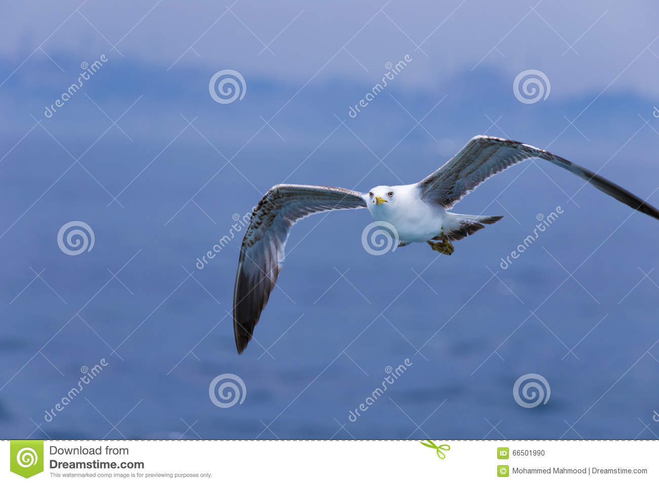 White falcon stock photo. Image of grey, natural, bird ...