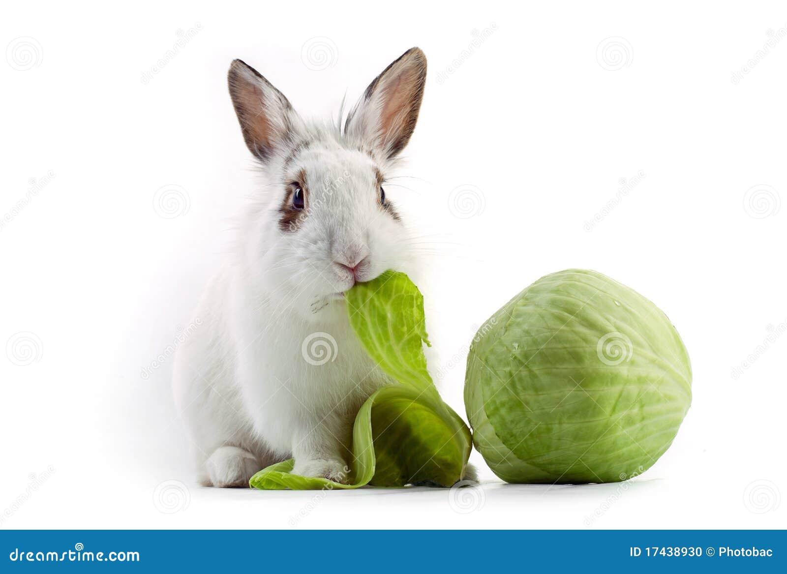 White Fancy Rabbit Eat...