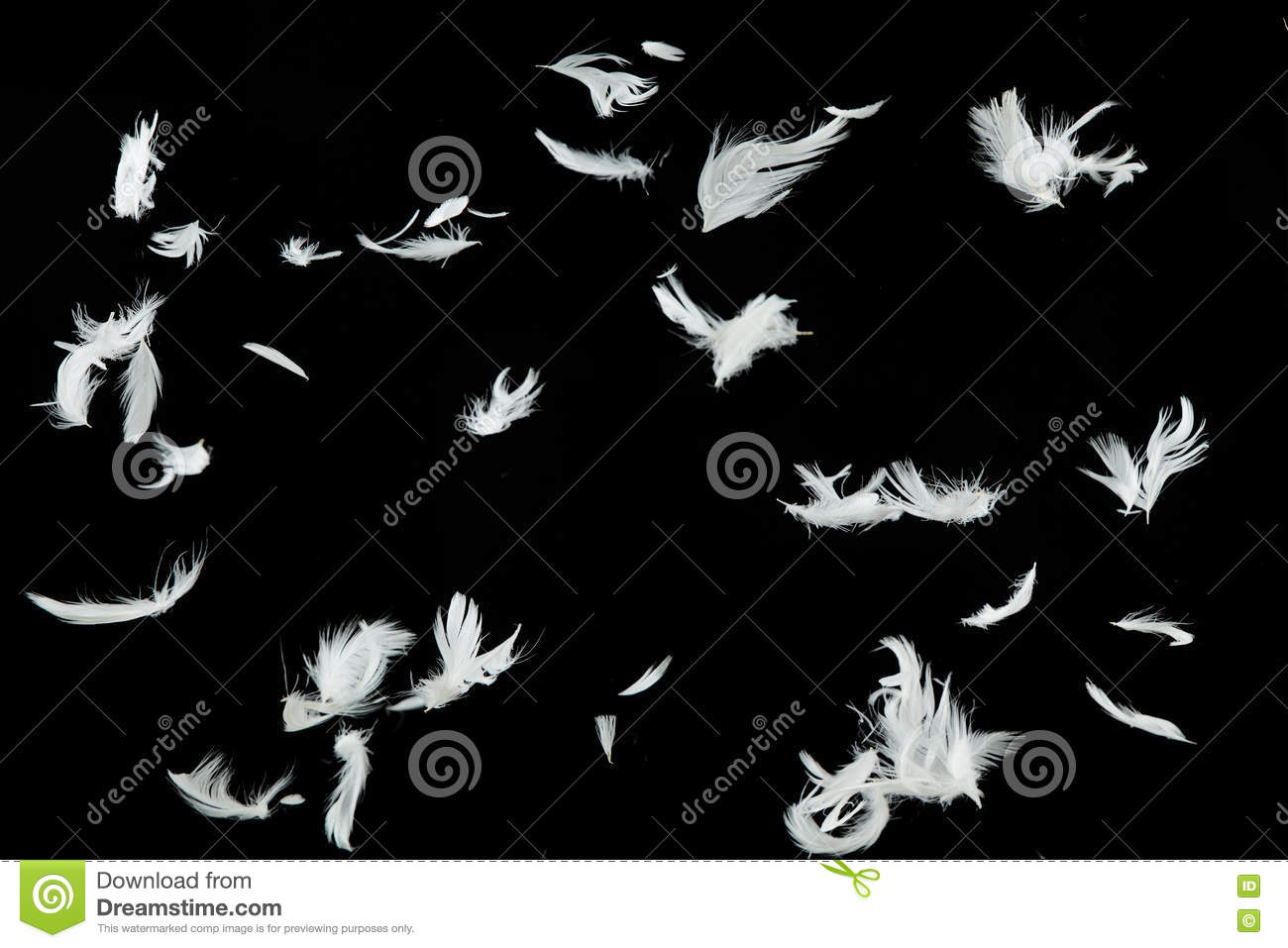 white feathers falling over black background stock photo