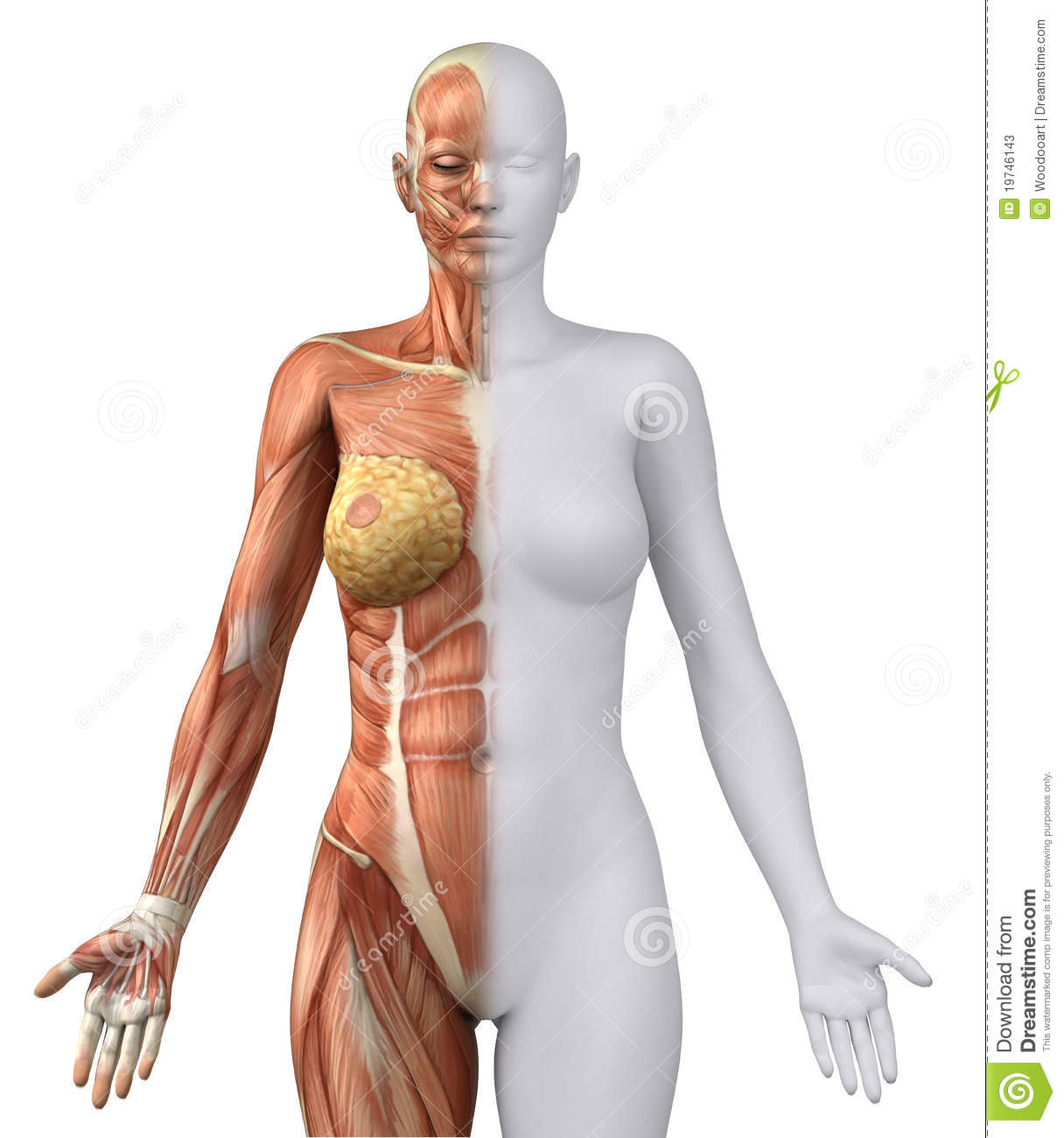 the female body essay Our women empowerment essay topics are going to comprehensively explain the nature of the subject they will help you ensure to execute your home assignment well many students find themselves getting stuck right at the start of an essay due to not being able to choose the right topic.