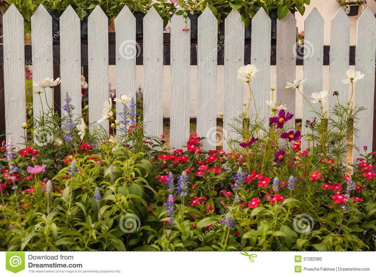 White Fence With Flowers Stock Photo Image 37282380