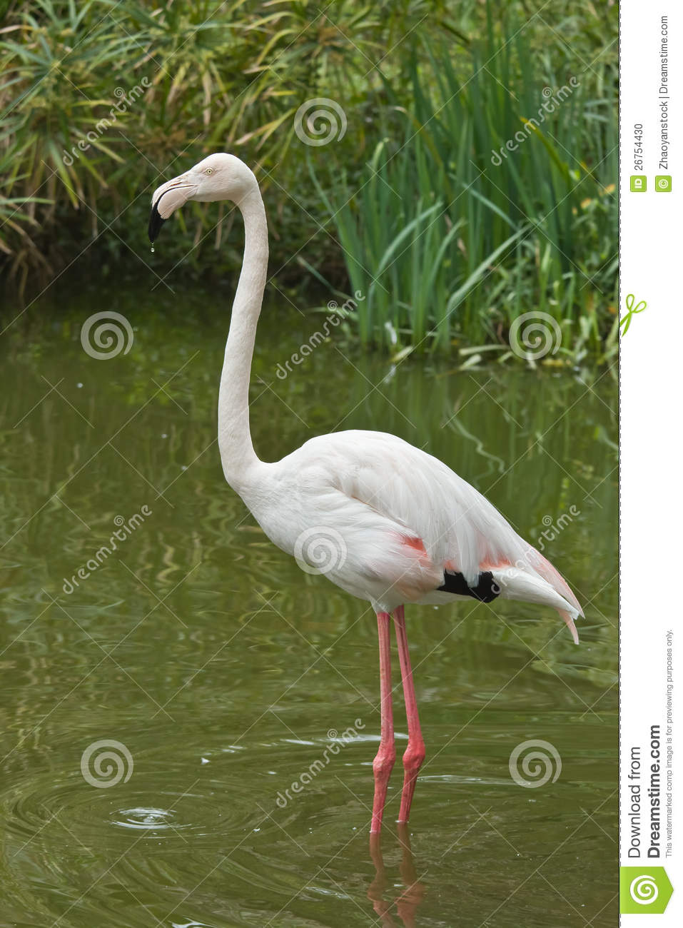 The White Flamingo: Jack the Ripper in South East Asia and millions of other books are available for instant access. view Kindle eBook | view Audible audiobook Enter your mobile number or email address below and we'll send you a link to download the free Kindle shopnow-ahoqsxpv.gas: