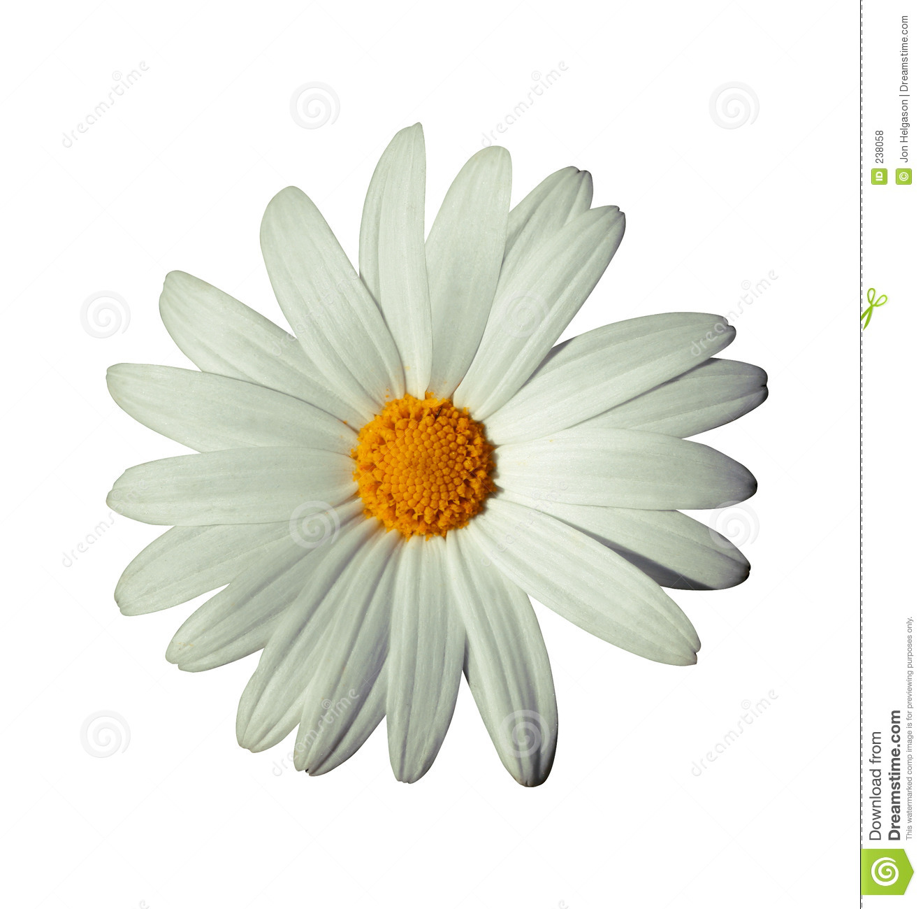 White Flower Stock Photo Image Of Flowershop Seeds Design 238058