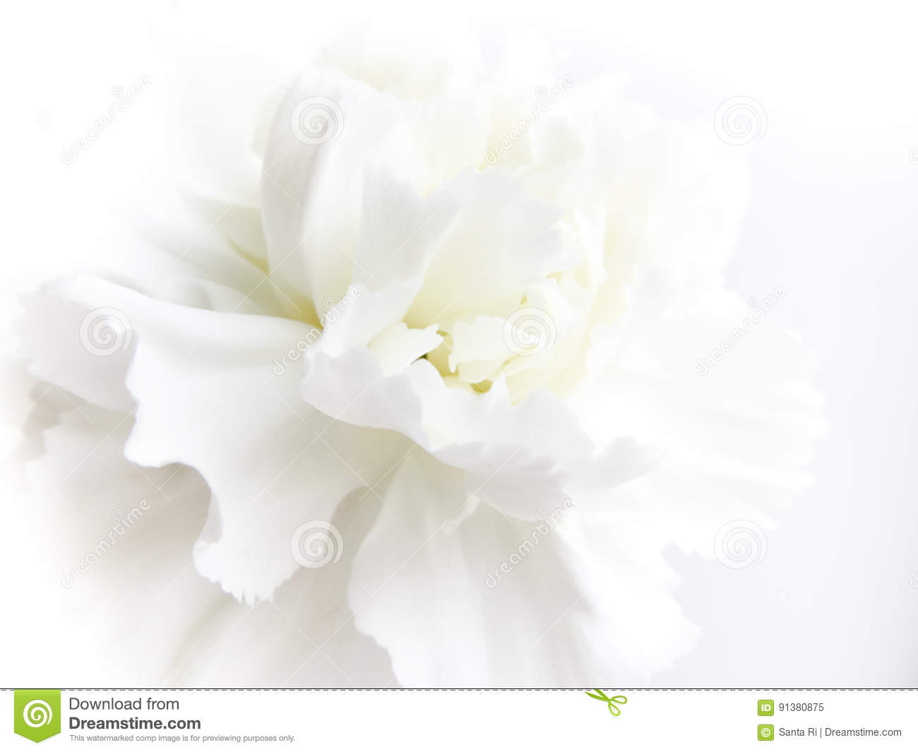 White Flower Background Stock Image Image Of Gray Closeup 91380875