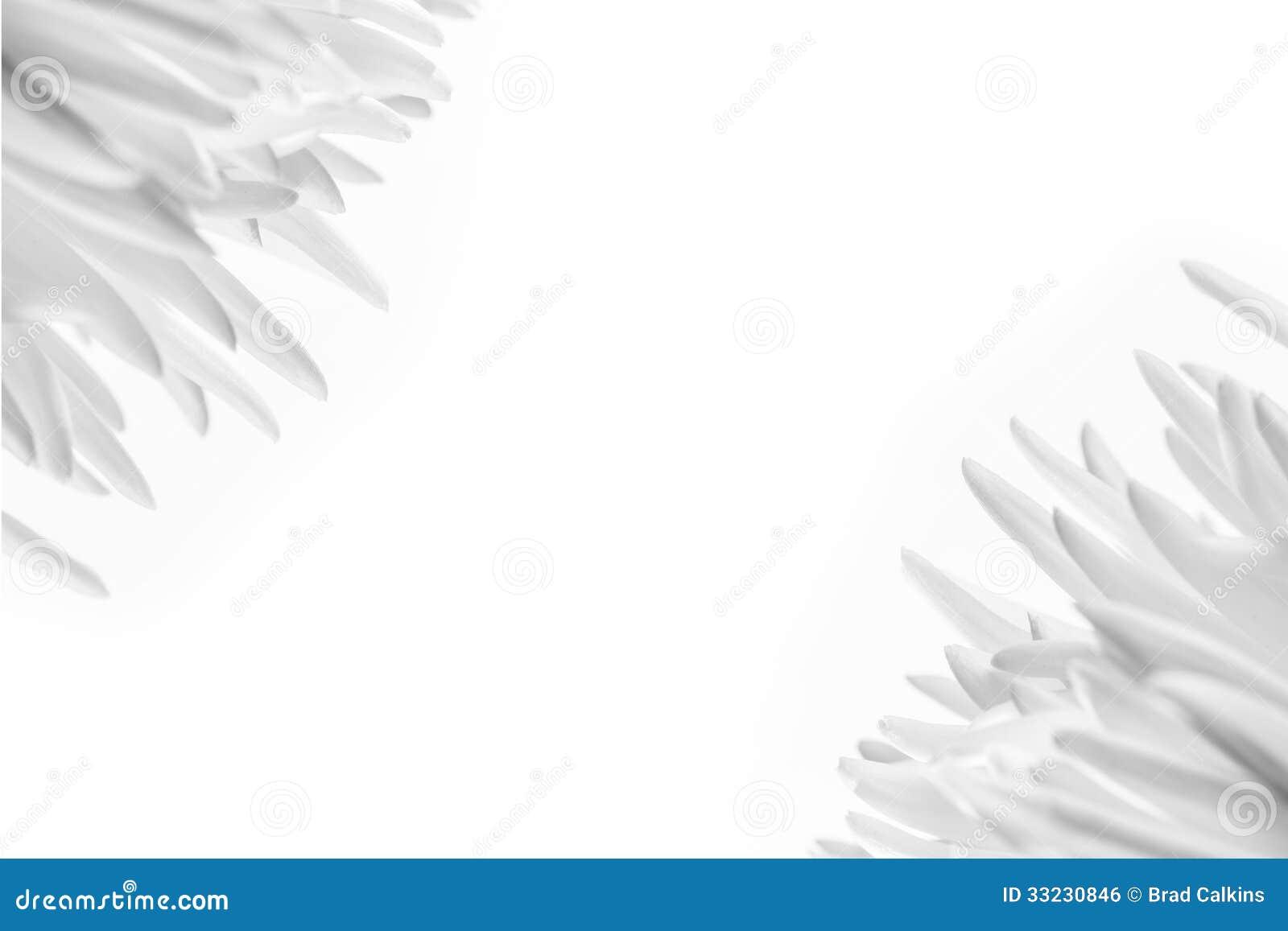 White flower background stock photo image of beauty 33230846 white flower background mightylinksfo Images