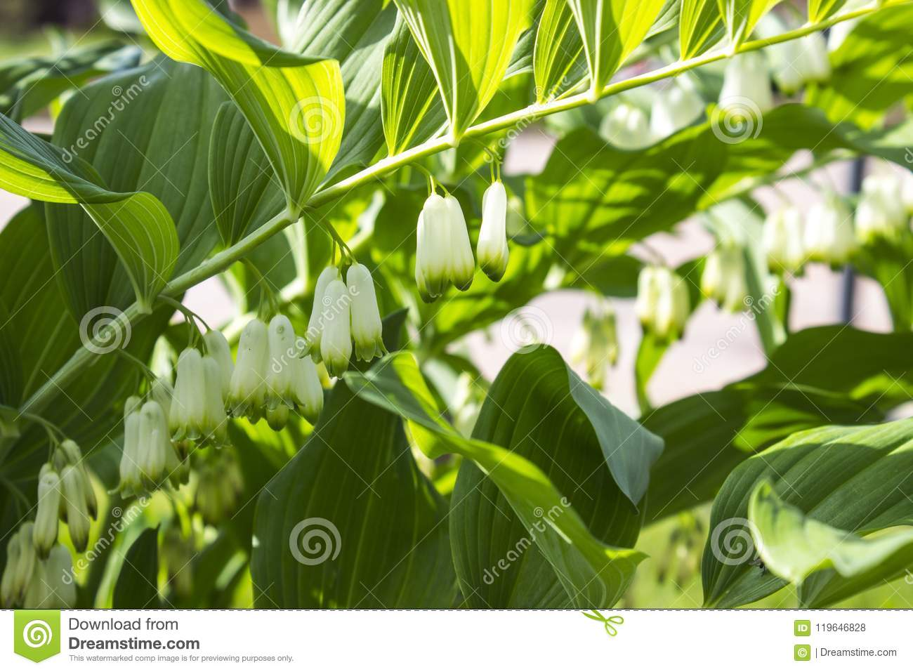White Flower Background Hd Stock Photo Image Of Earth 119646828
