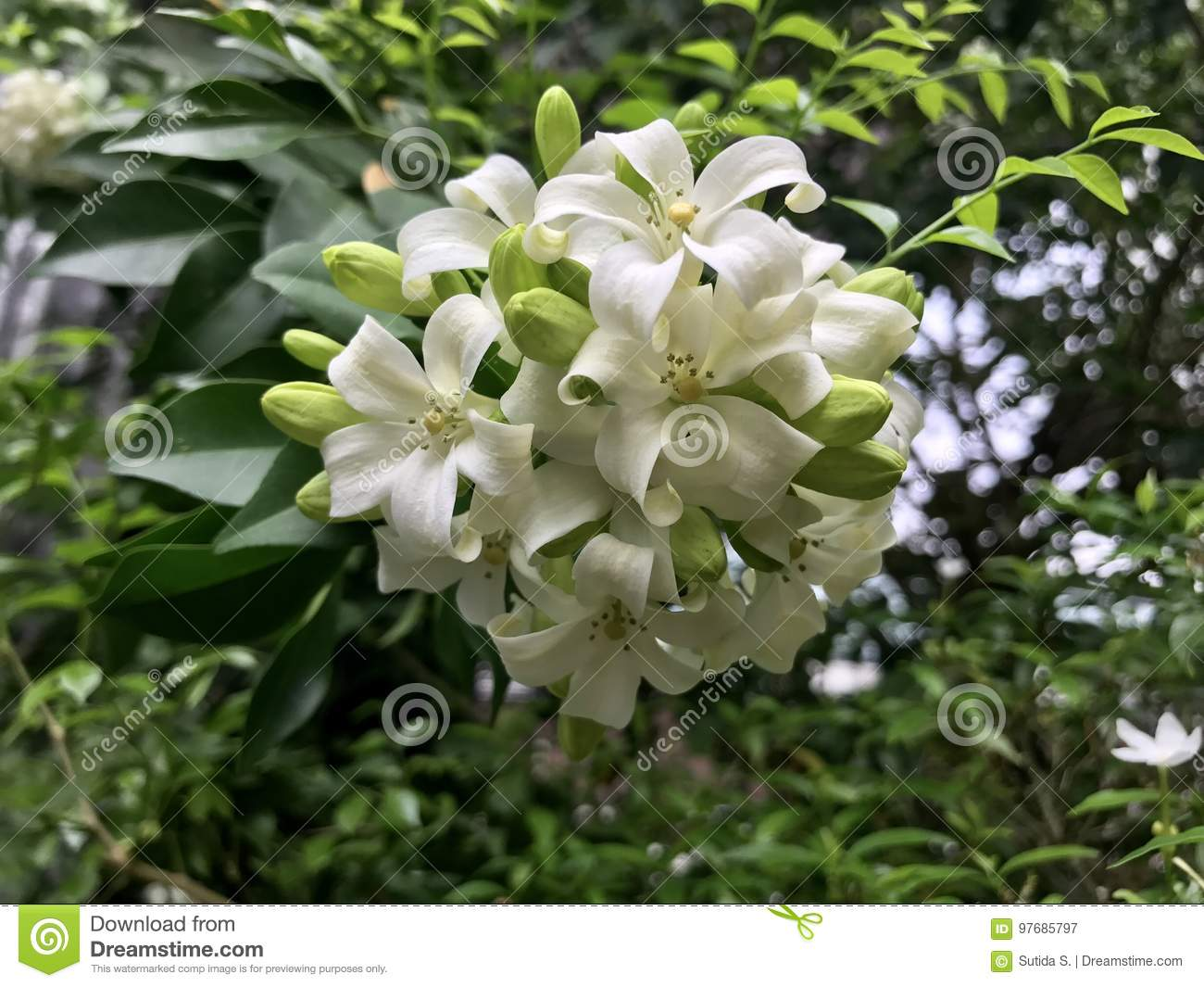 White flower bouquet stock image image of floral bloom 97685797 white flower bouquet izmirmasajfo