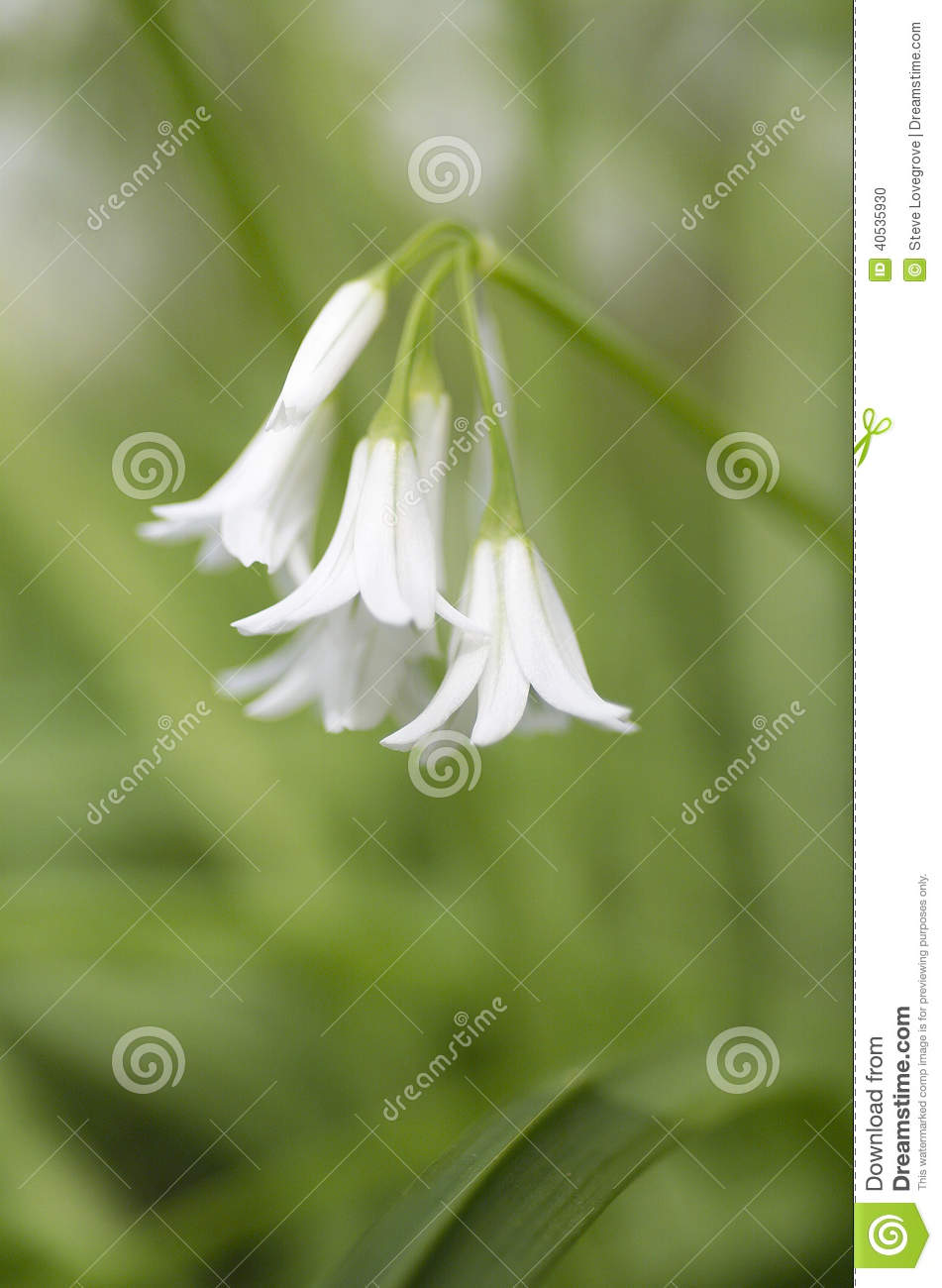 White flower stock photo image of wildflower garden 40535930 download white flower stock photo image of wildflower garden 40535930 mightylinksfo