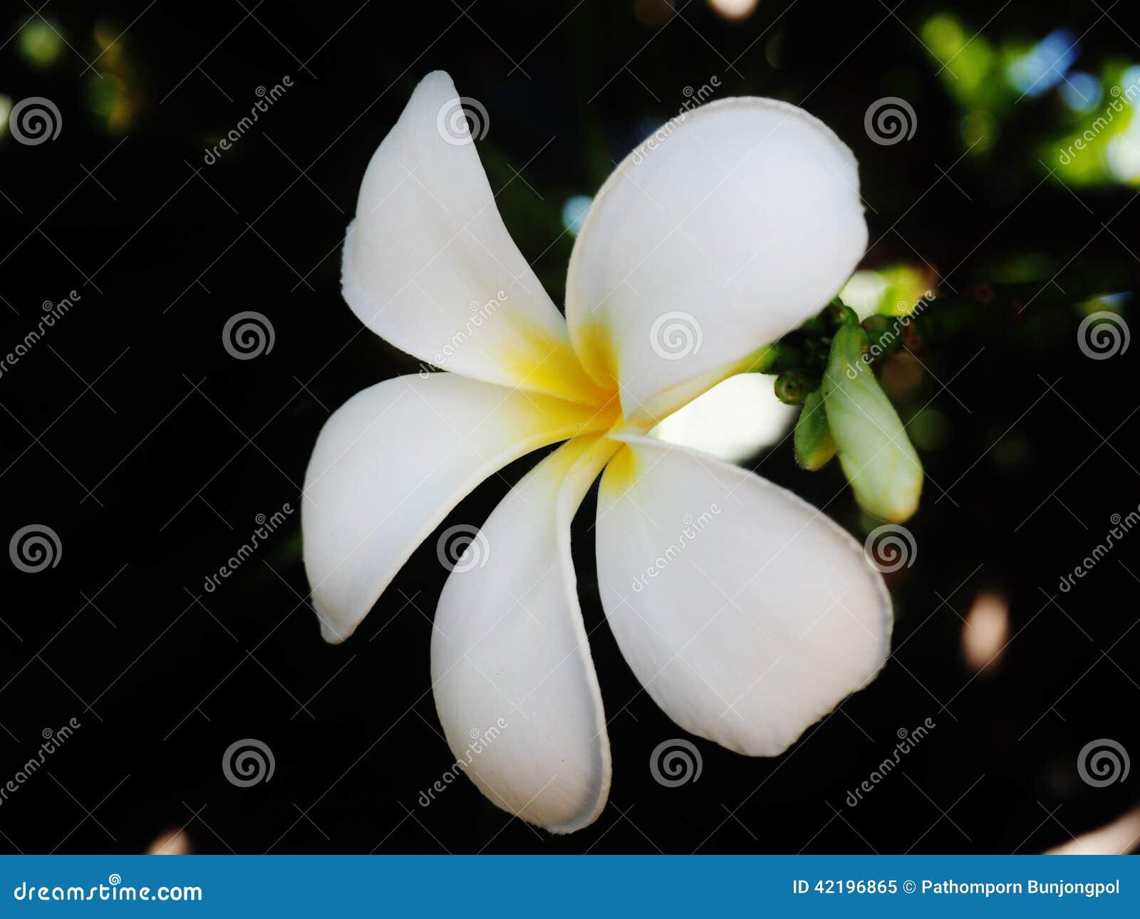 White flower stock image image of wallpaper yellow 42196865 white flower mightylinksfo