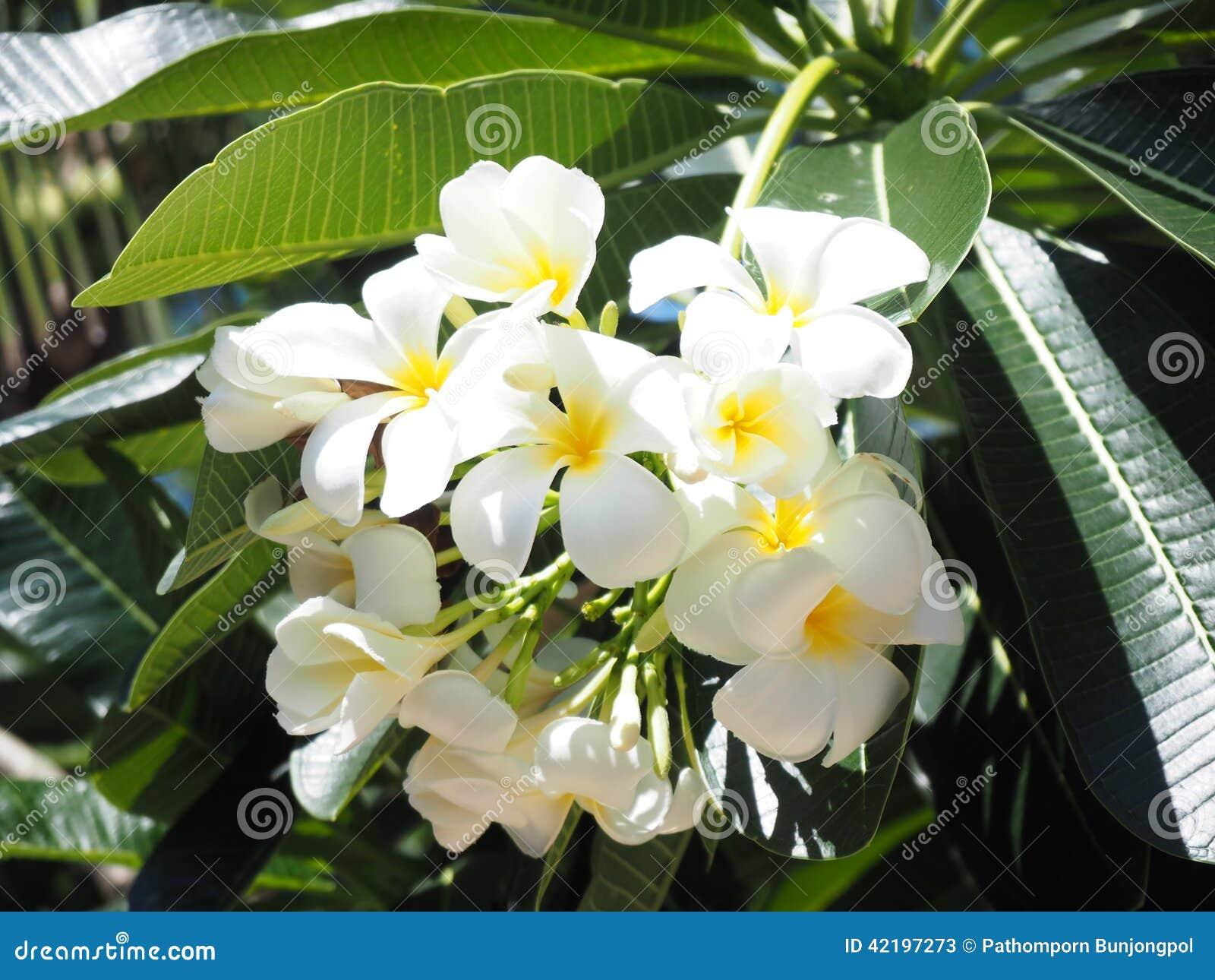 White flower stock photo 42197273 megapixl white flower mightylinksfo