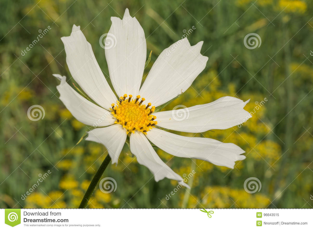 White flower daisy with a stem on a green background stock image download white flower daisy with a stem on a green background stock image image of mightylinksfo