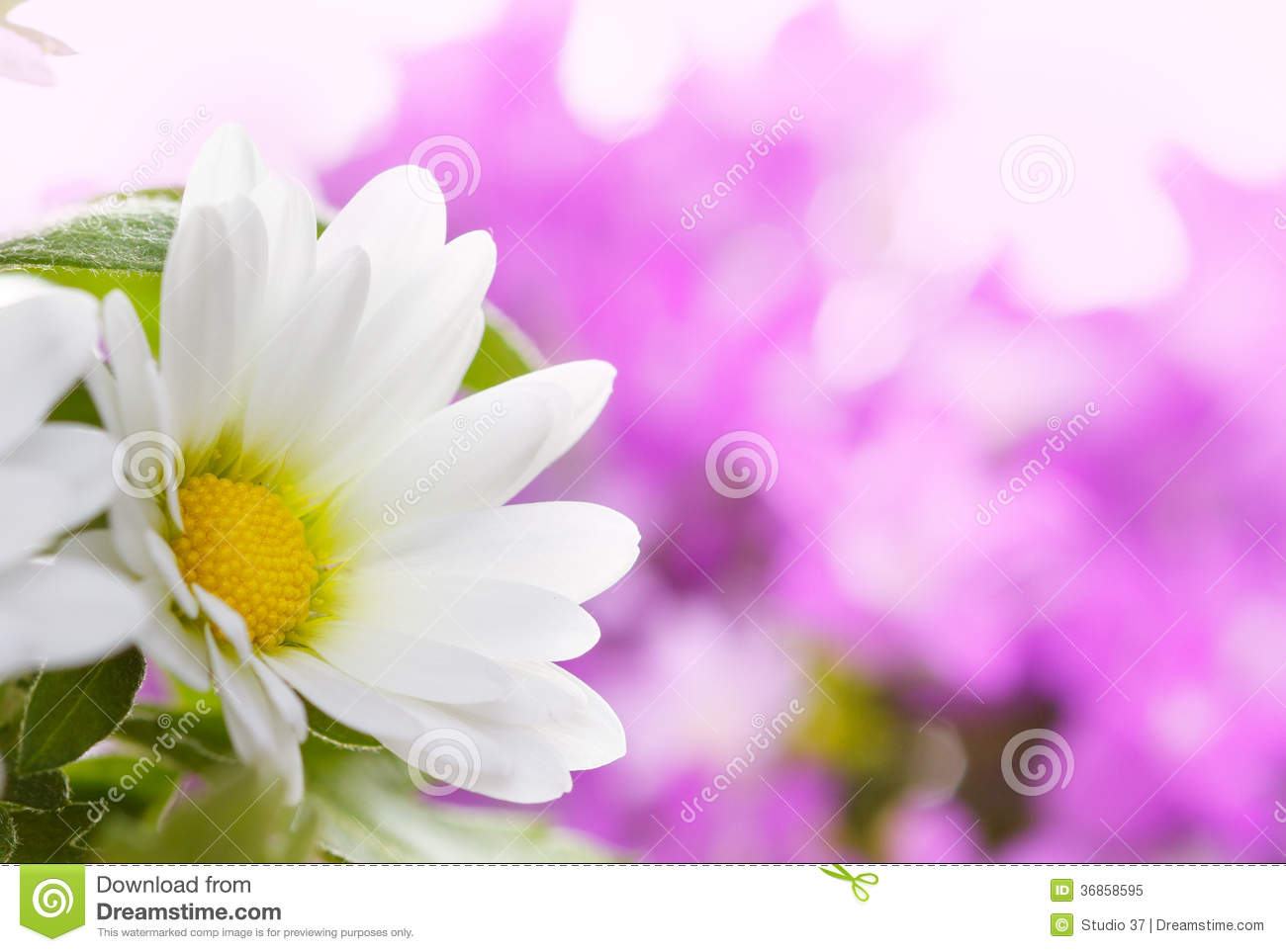 white flower details royalty free stock photo image