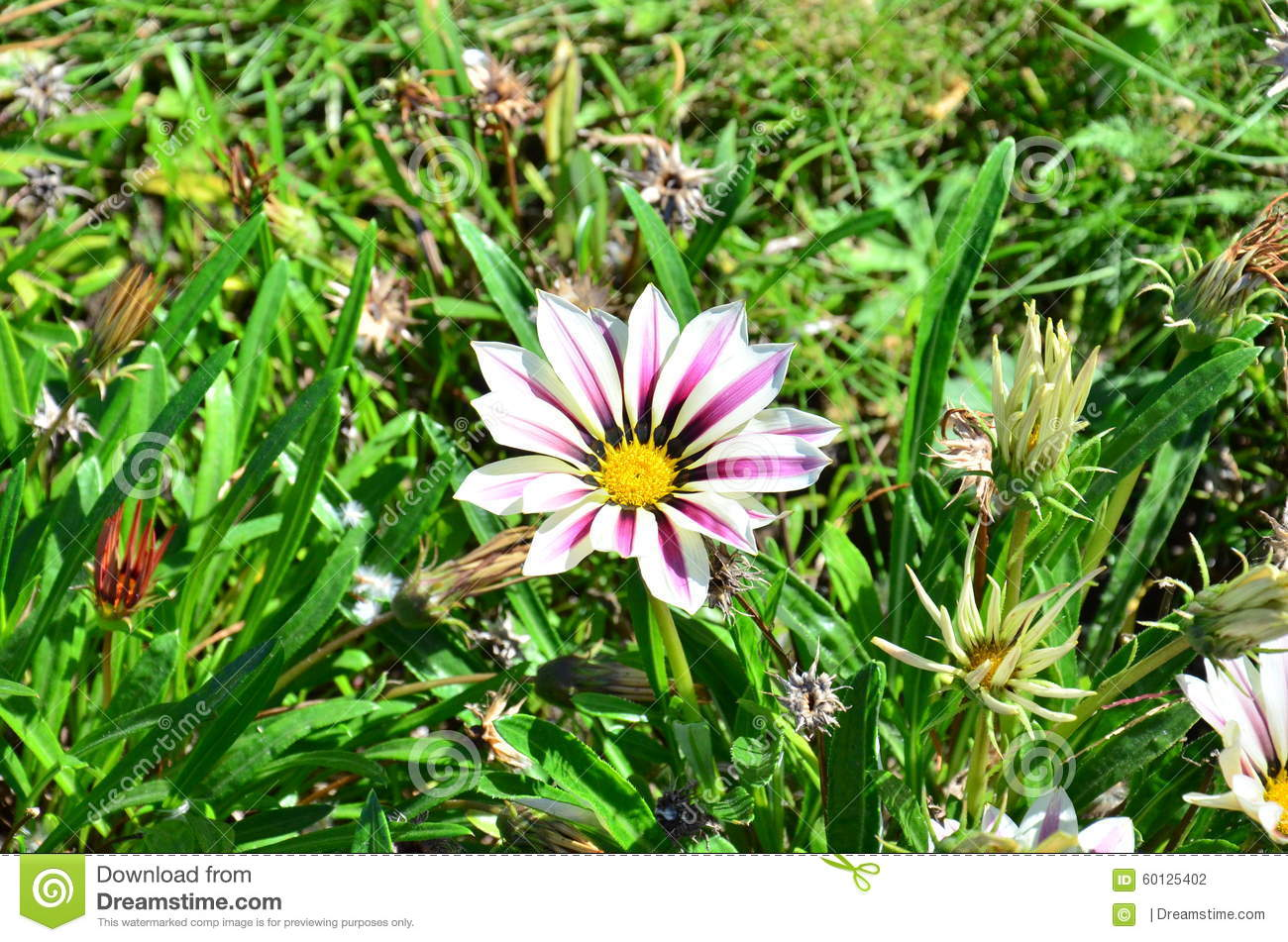 White Flower On The Flowerbed Stock Photo Image Of Summer Autumn