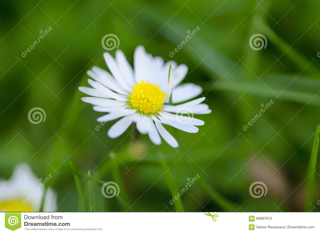 White Flower On Grass Close Up Stock Photo Image Of Small Flower