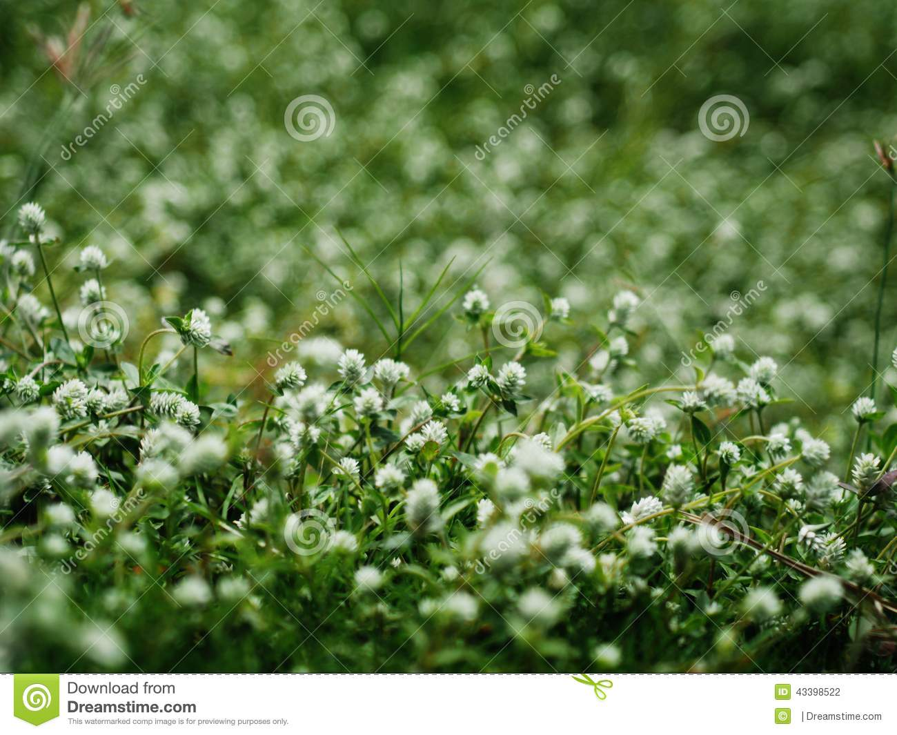 White flower grass stock photo image of green grass 43398522 white flower grass mightylinksfo