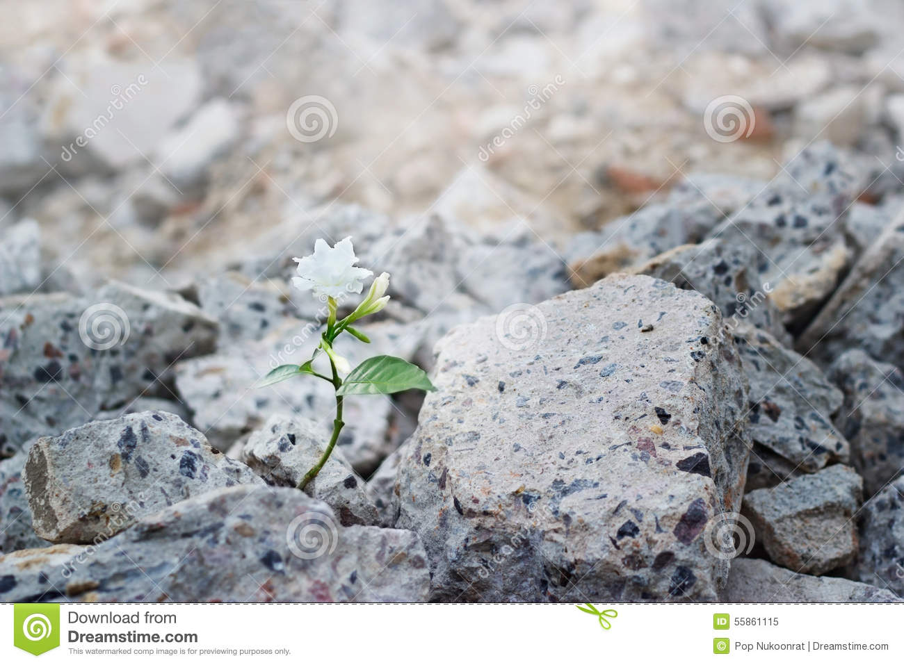 White flower growing on cracks ruins building, hope and faith concept, soft focus