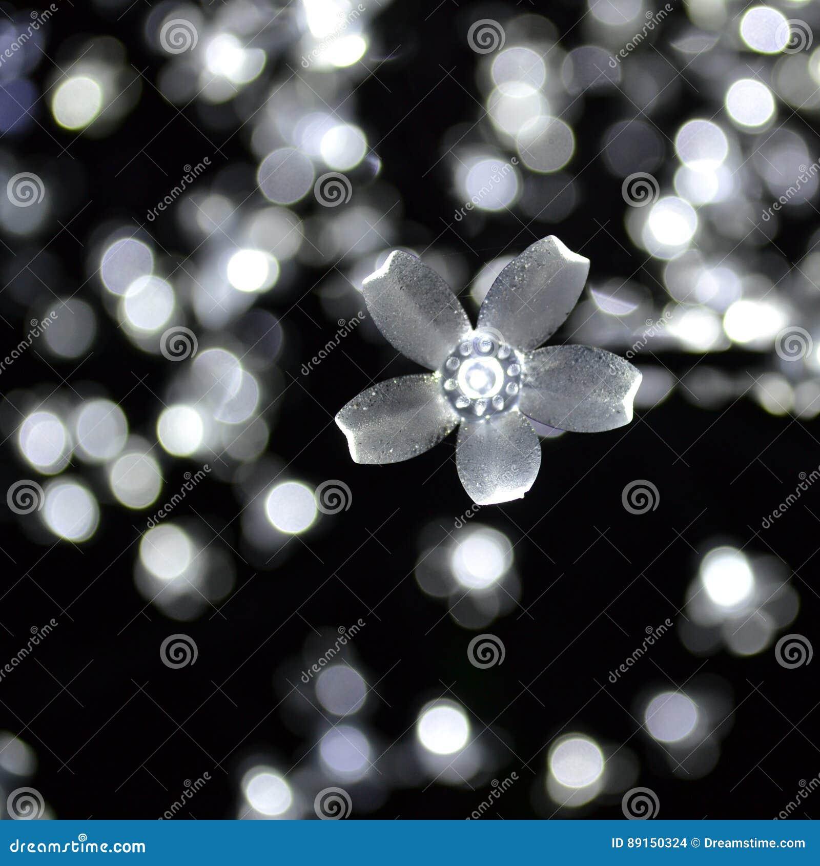 White Flower Lights Bokeh Stock Photo Image Of Pretty 89150324