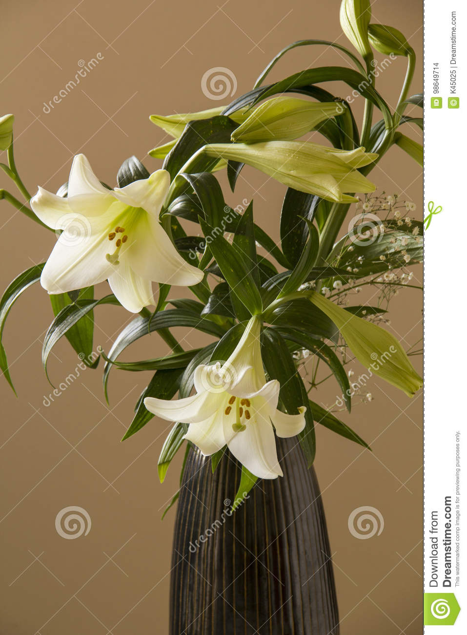 White Flower Lily In The Black Vase On A Beige Background Stock
