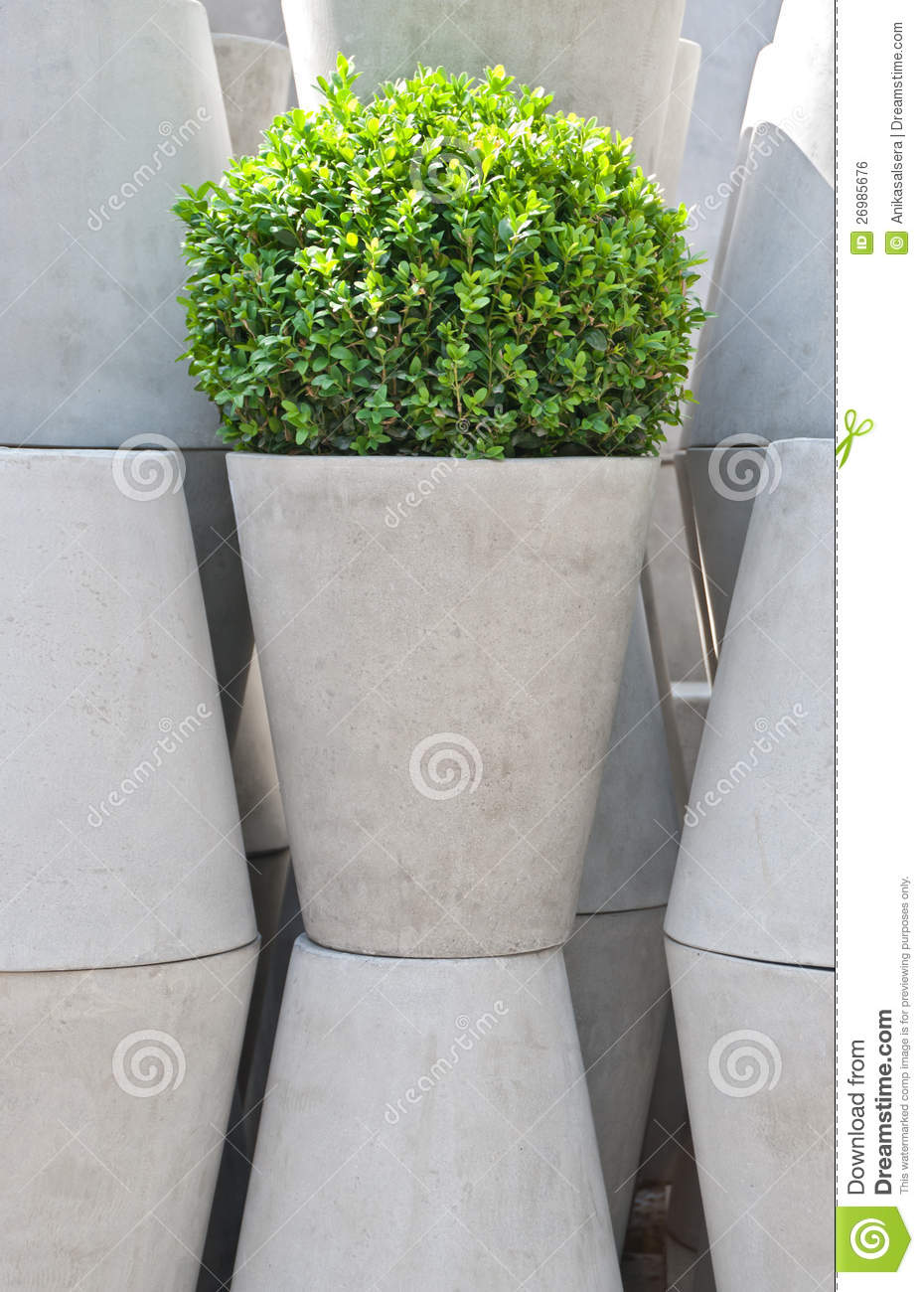 White flowering plants for pots choice image fresh lotus flowers white flower pots and green plant stock photo image of close mightylinksfo