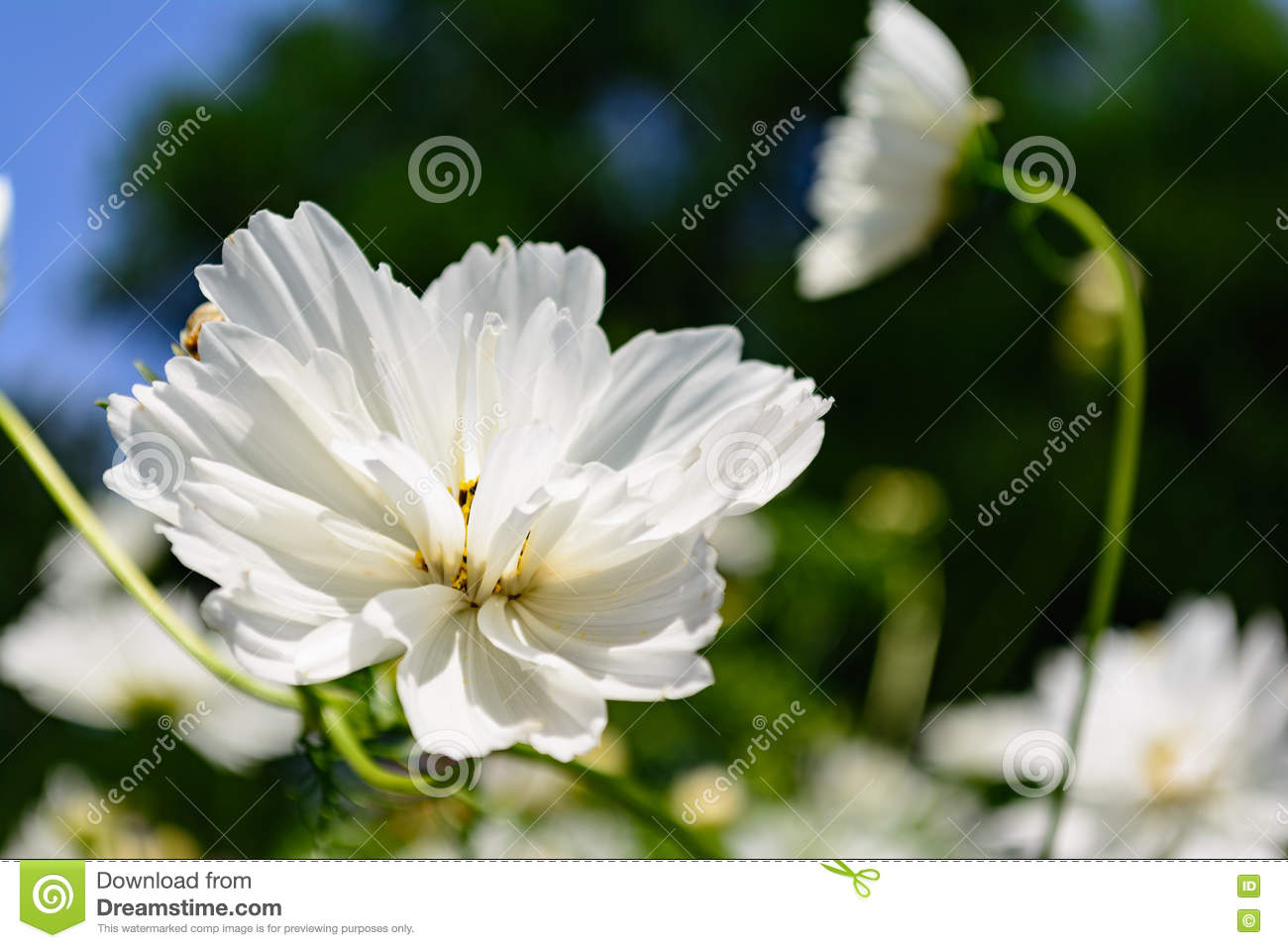 White Flower Selective Focus Foreground Stock Photo Image Of Green