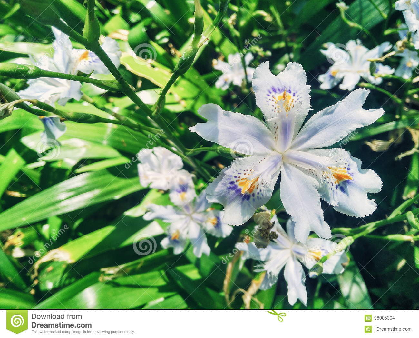 White Flower Six Petal Stock Photo Image Of Petal Flower 98005304