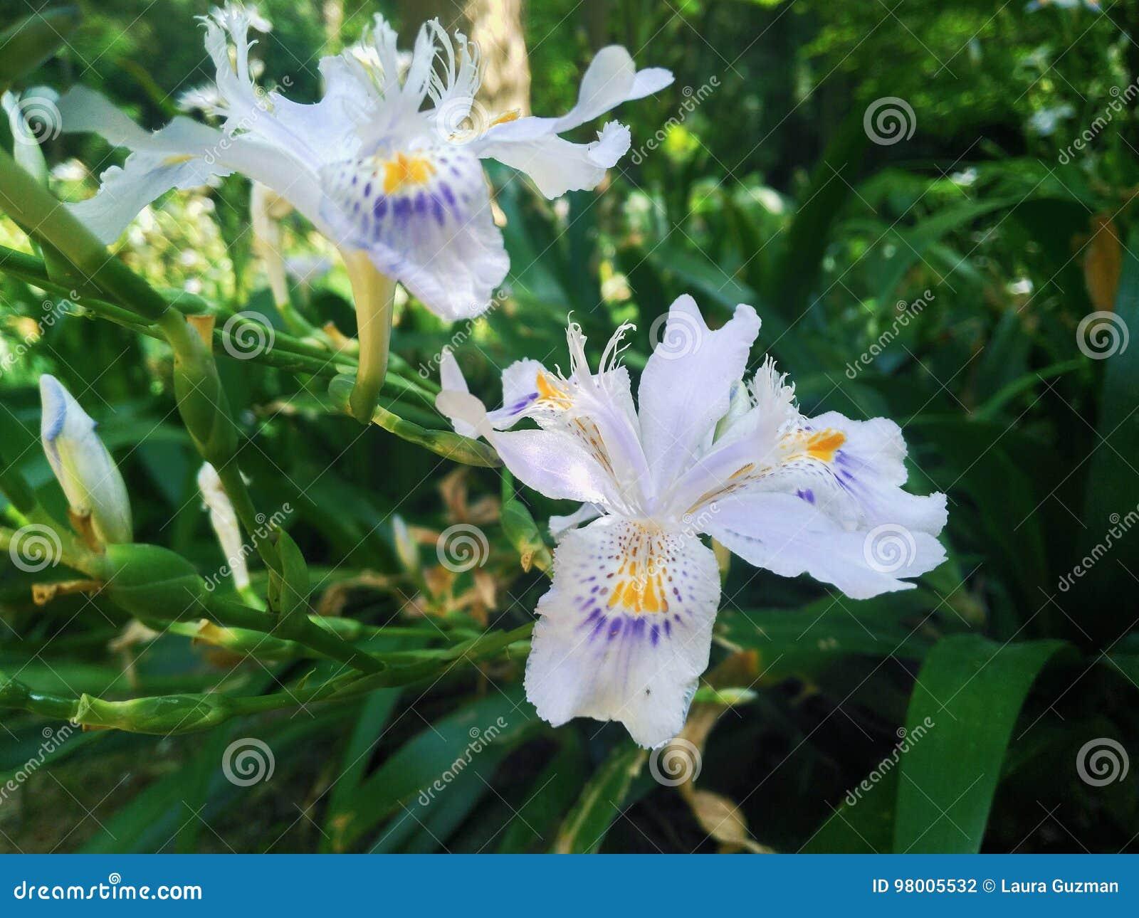 White Flower Six Petal Stock Photo Image Of White Flower 98005532