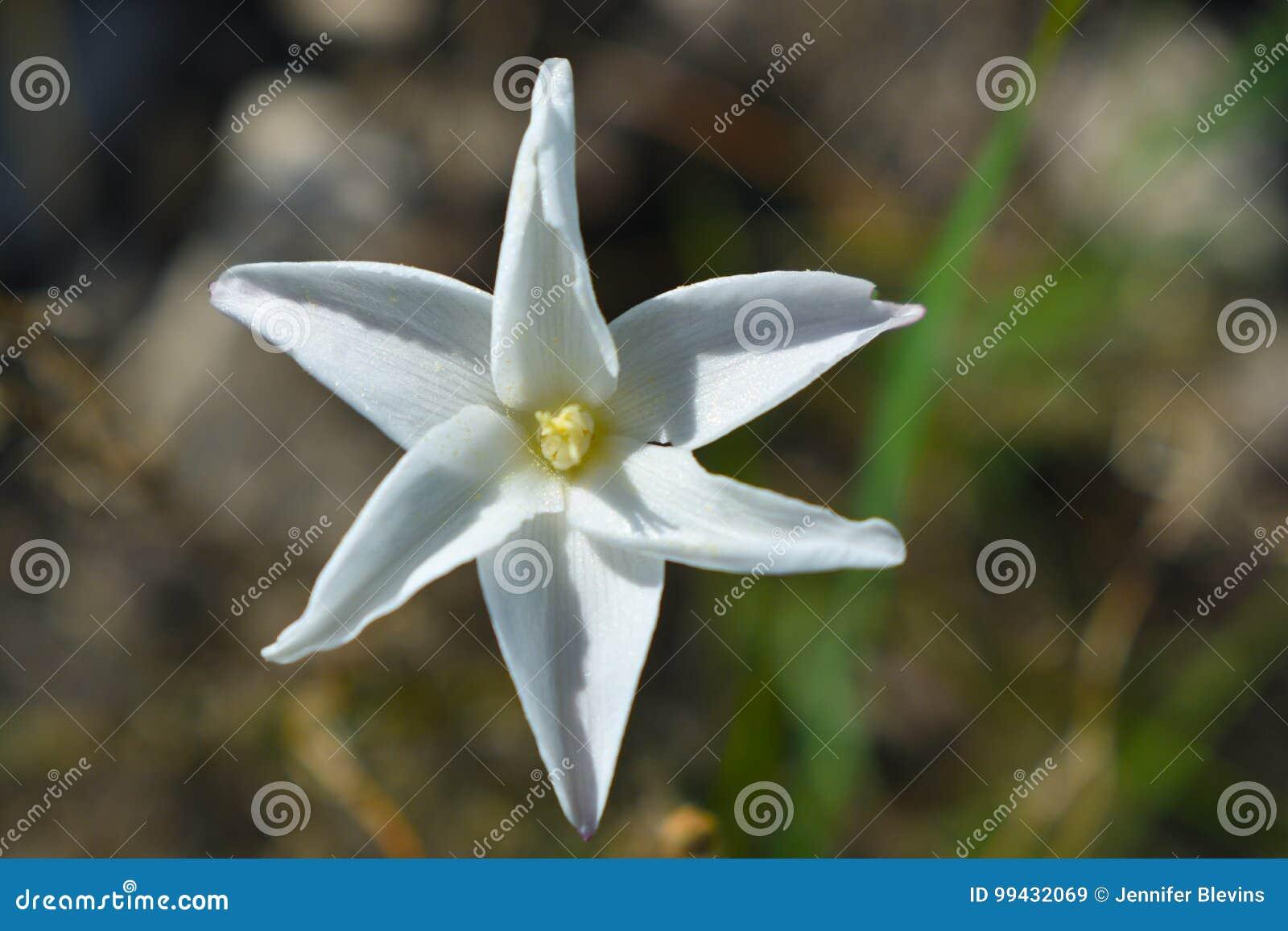 White Flower Stock Image Image Of Garden Outdoors White 99432069