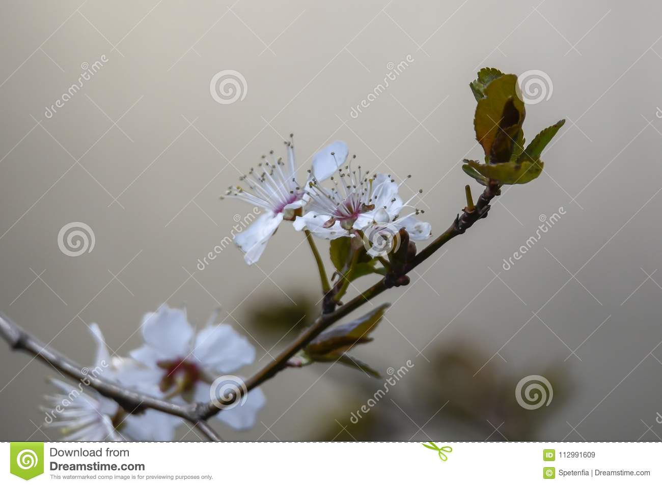 White flower on the tree in spring