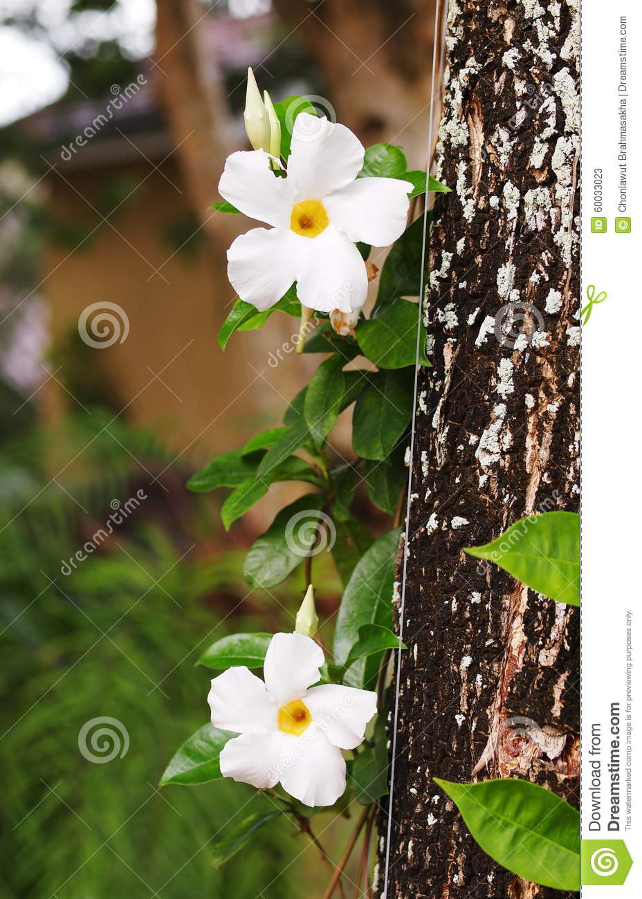 White Flower Stock Image Image Of Beautiful Clover 60033023