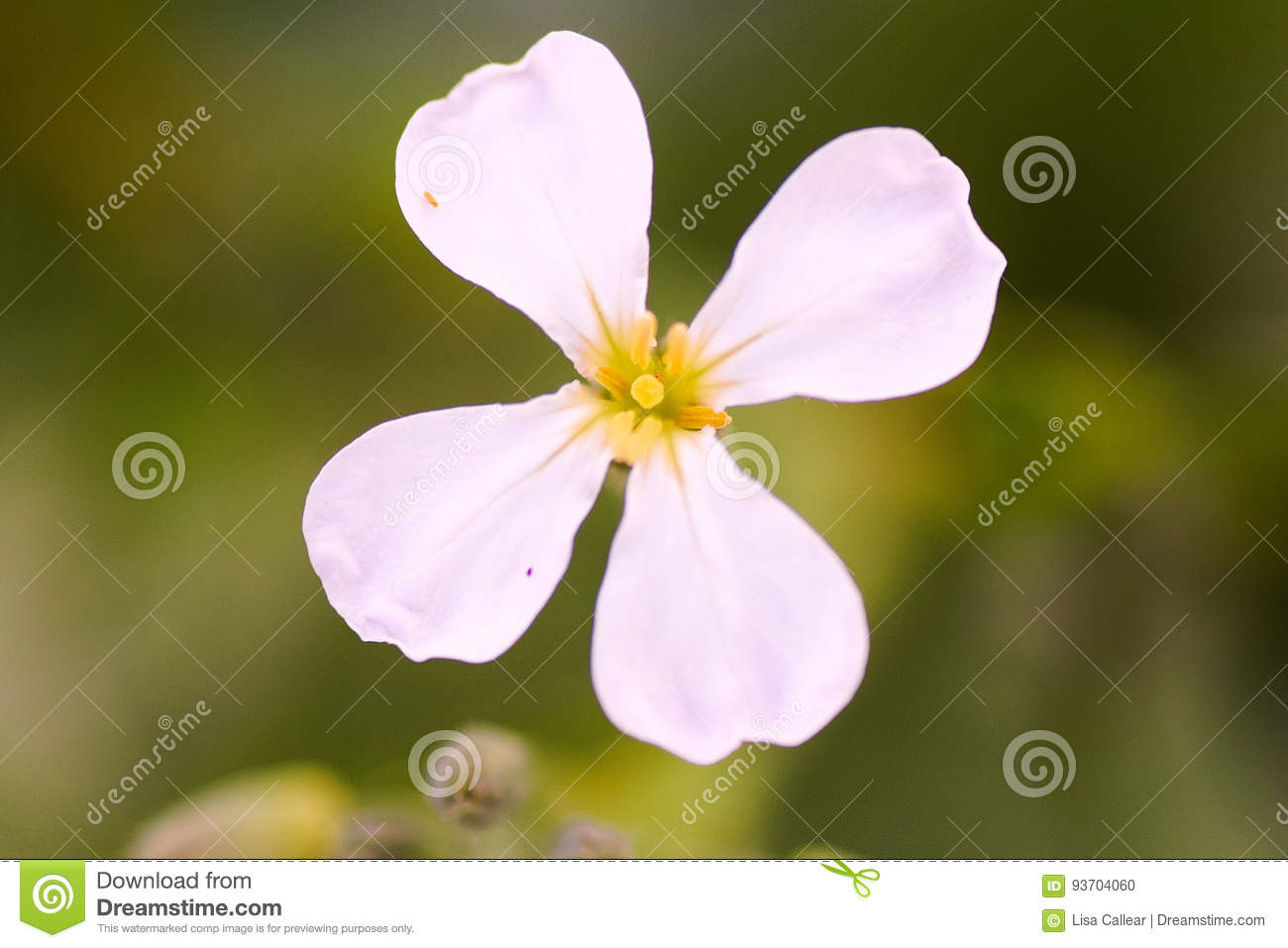 White Flower Unknown Name Stock Photo Image Of Insect 93704060